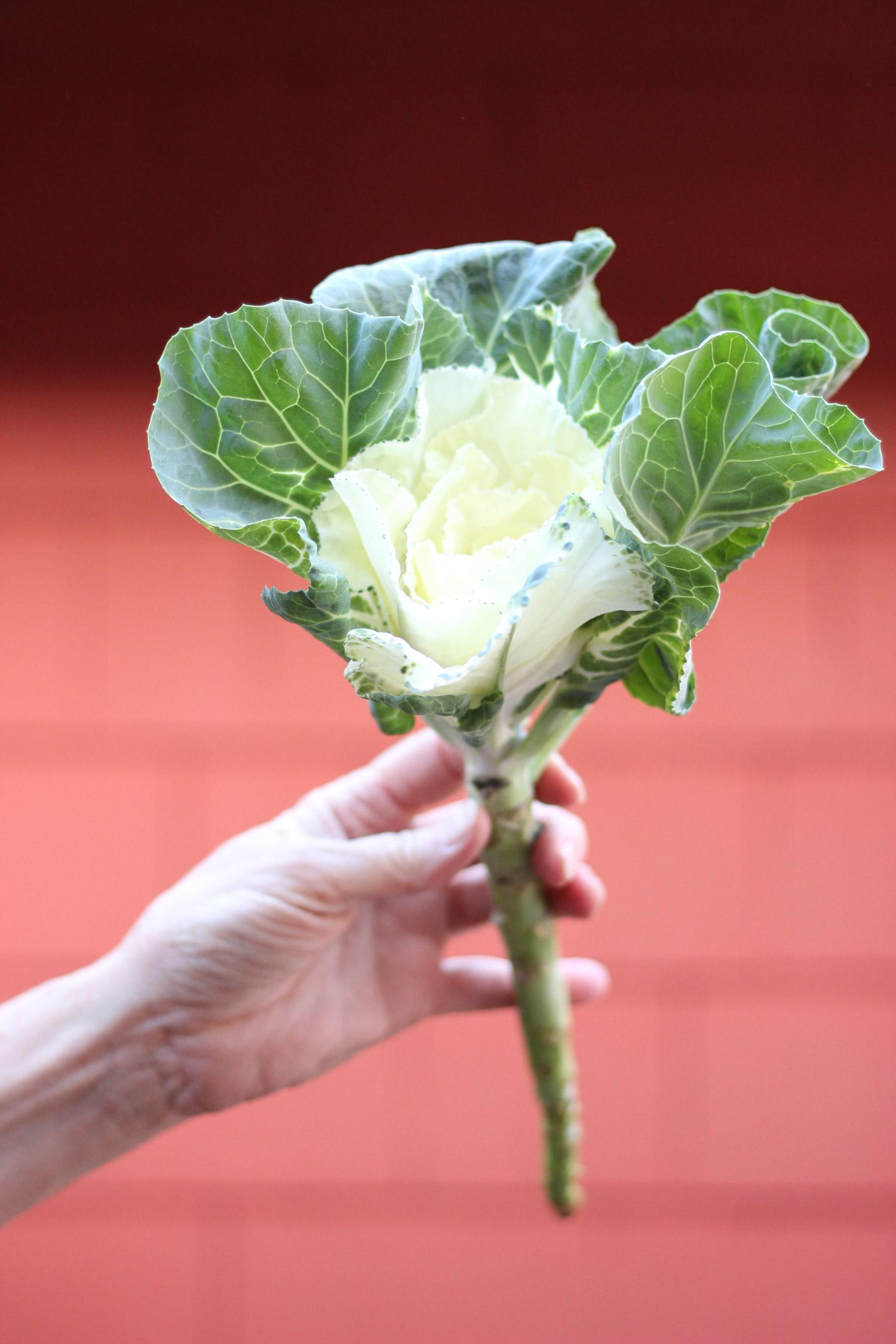 Ah-ha, now we need 6 stems of kale.