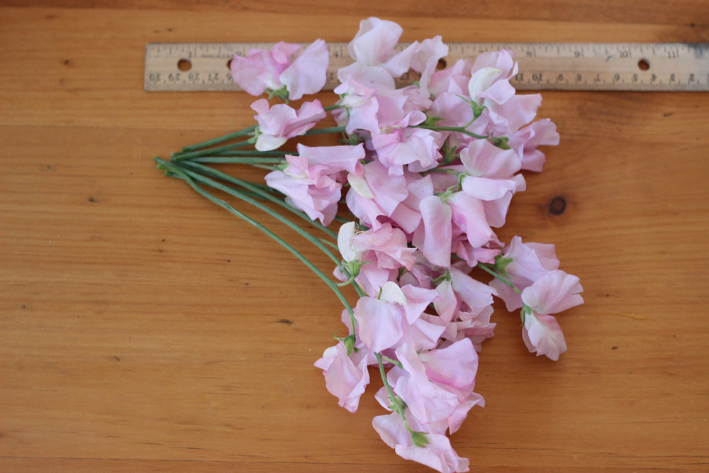 Cut 9 sweet pea stems from 6 - 9 inches.