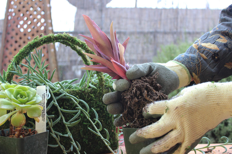 Loosen root ball, and get rid of extra dirt.