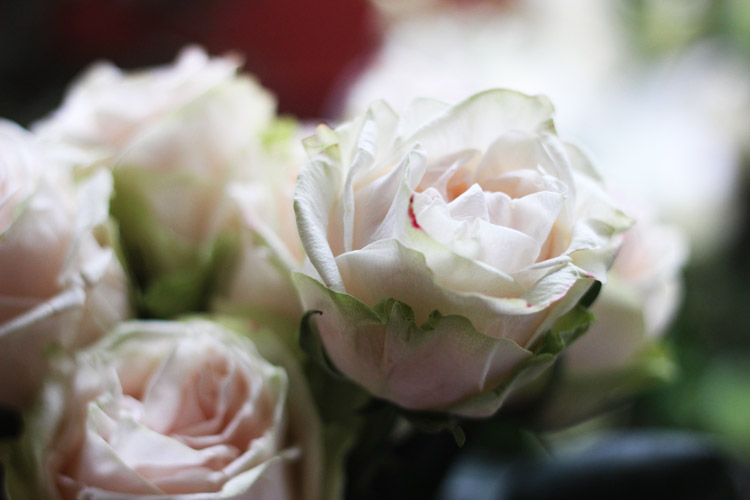 These roses have variegated petals.