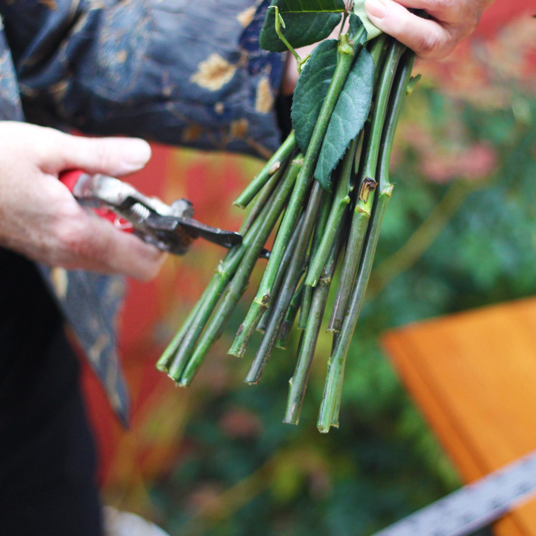Cut bottom of stems.