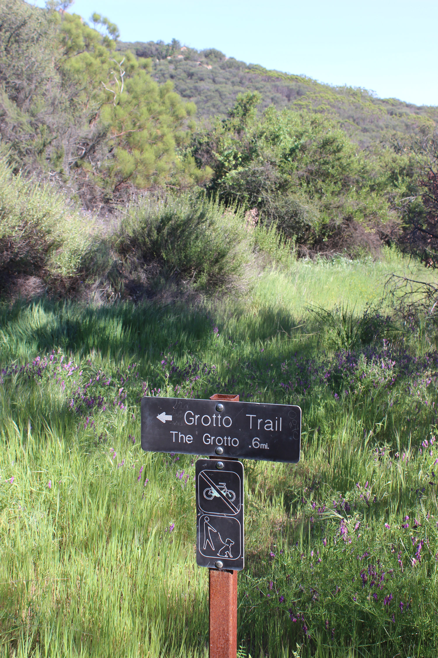 Sign to the Grotto Trail surrounded by lavender flowers and grass.
