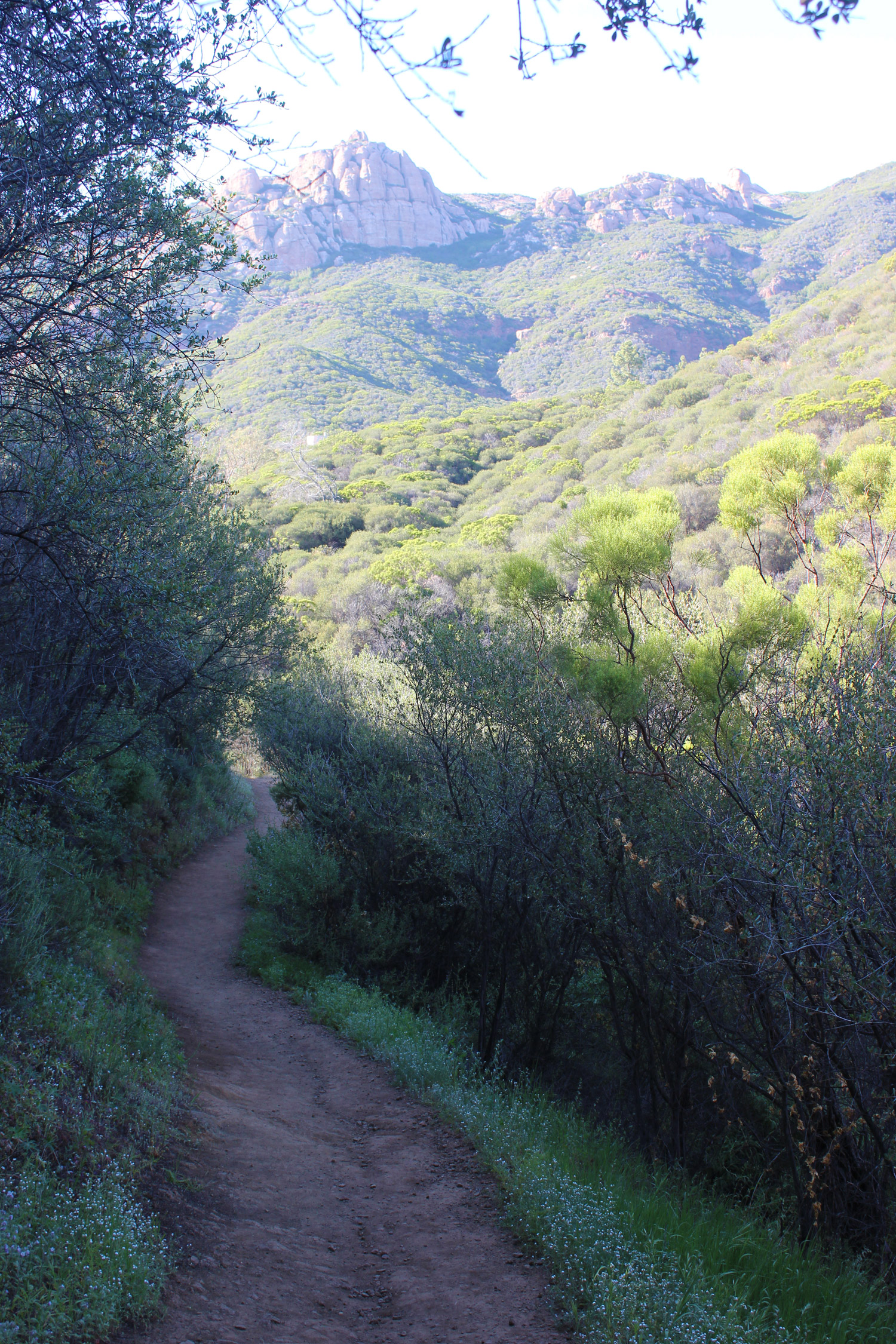 This is the trail heading home.