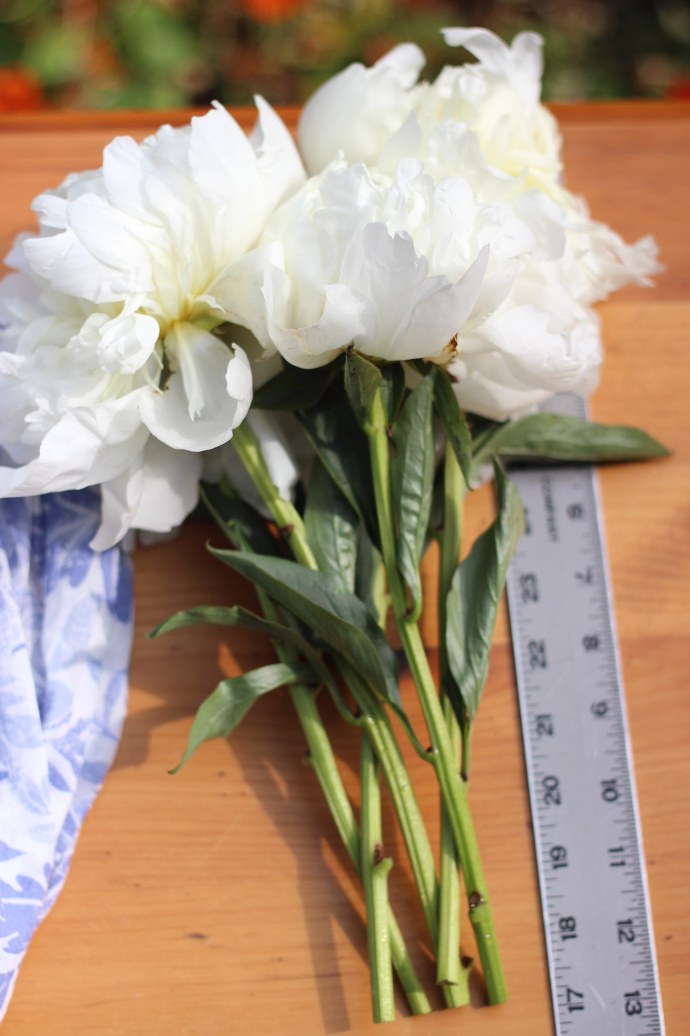 """Cut flower stems at a 45 degree angle, and about 13"""" long."""
