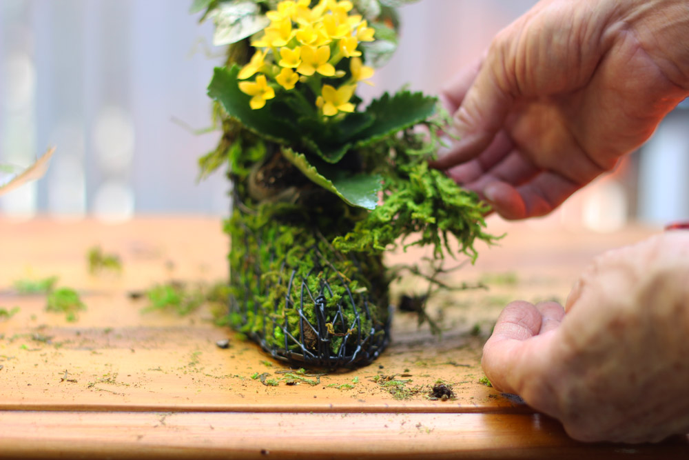 Put moss under leaves, covering the baggie.
