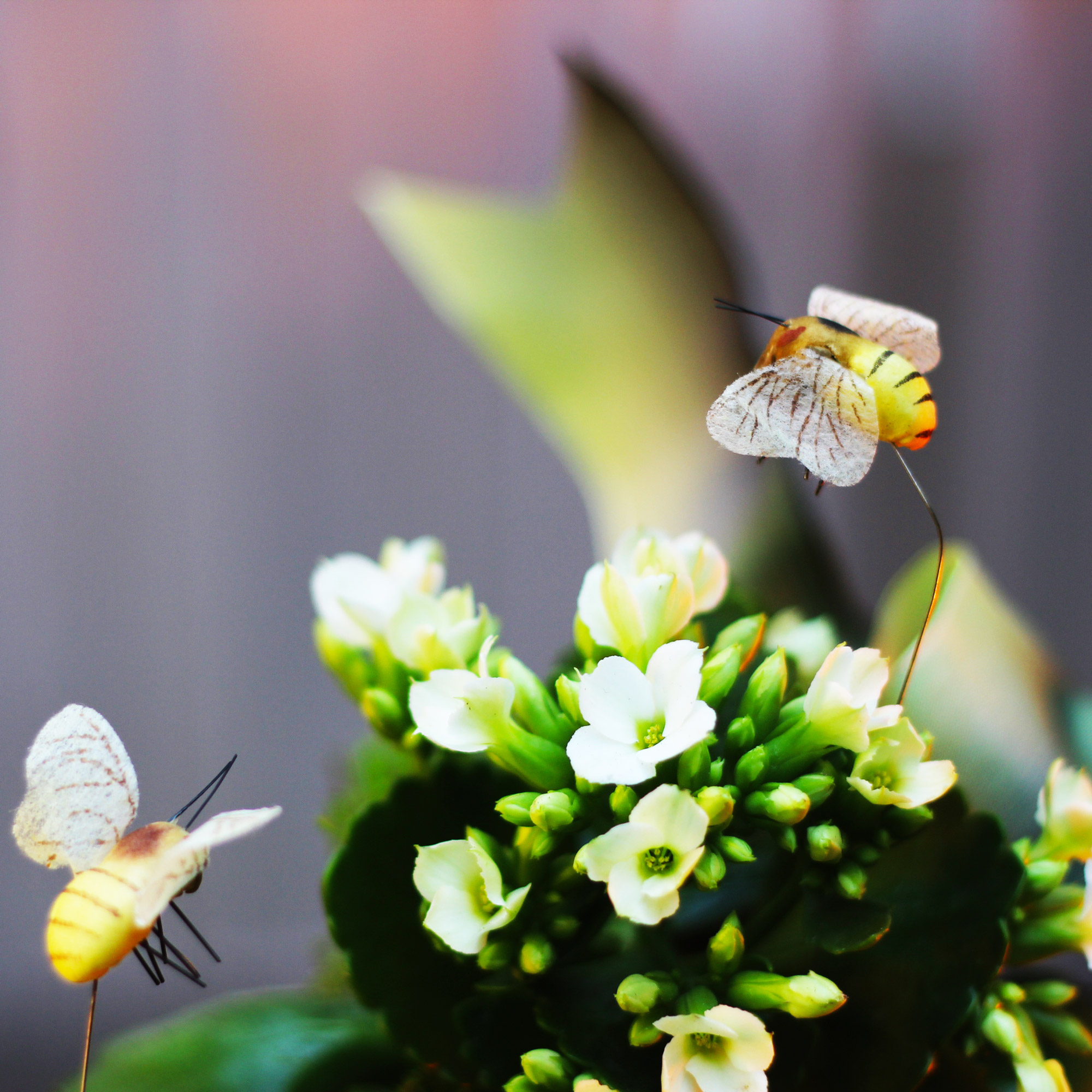 Bees look like they arehoovering above flowers.