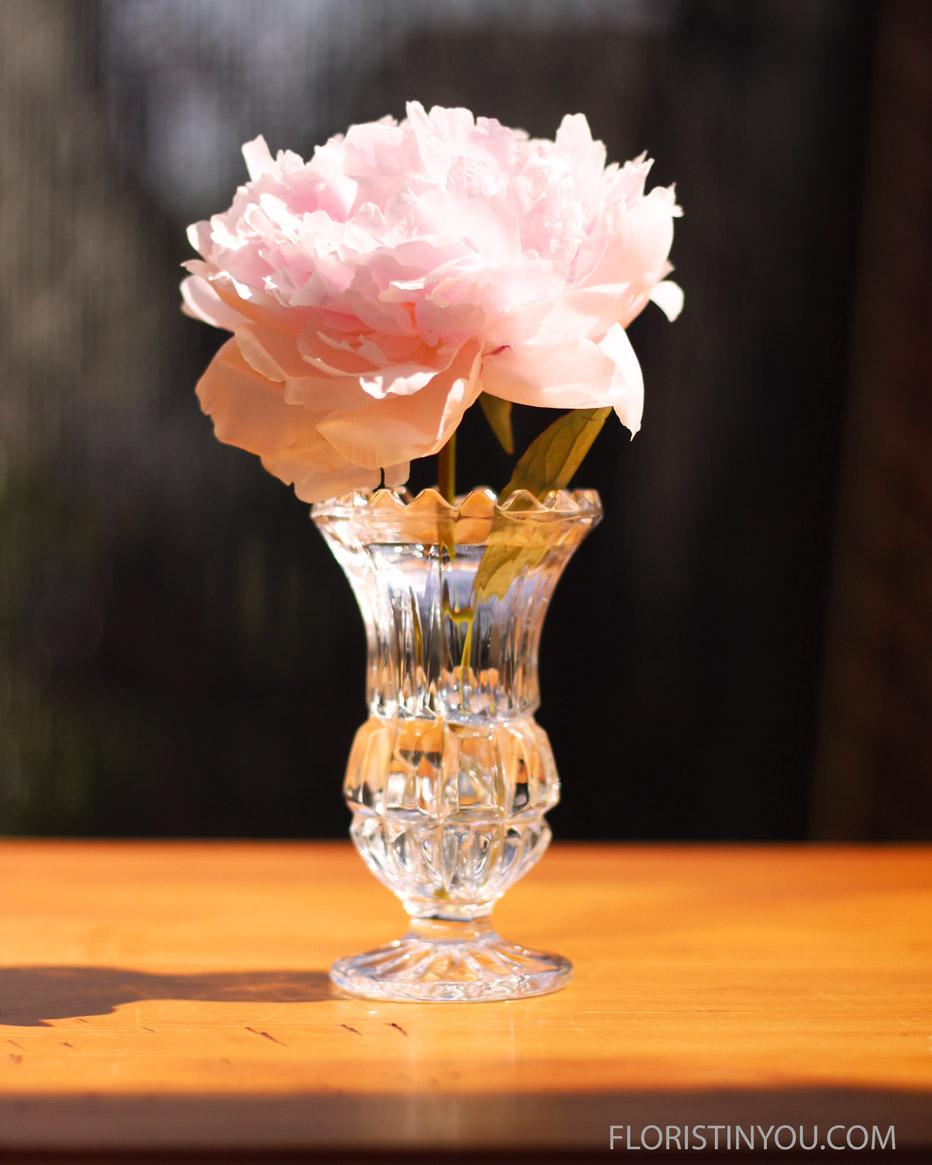 This tiny bud vase has 1 peony.