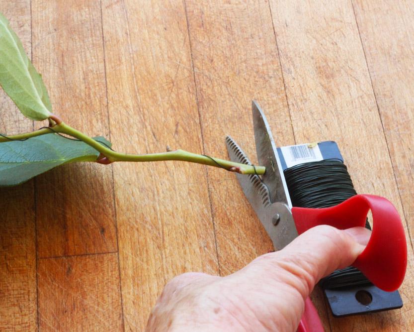Cut (2) 10 inch pieces Lemon Leaf. Wire them &bend them down a little.