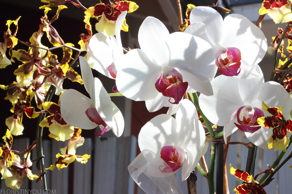 See tie on white orchid on right holding it upright?