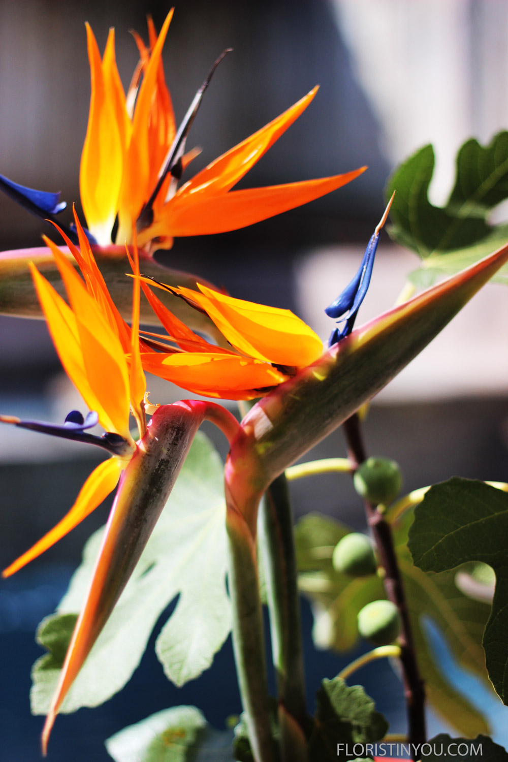 With these oranges and blues, this could be a study on complimentary colors. We will add these Bird of Paradise flowers next.