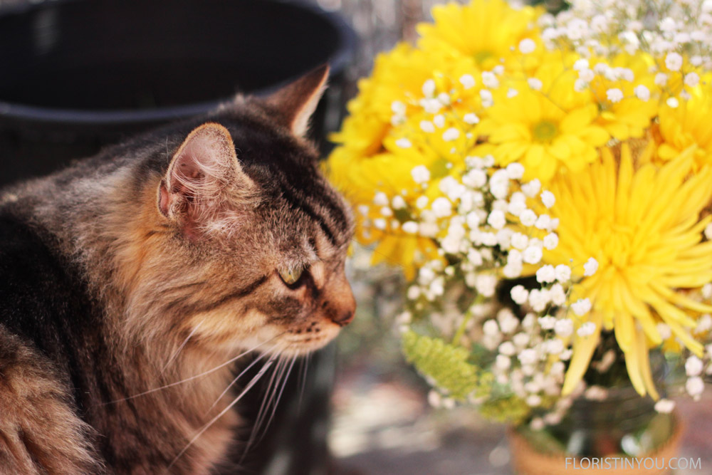 """""""Thwarted again. She put the flowers next to these nasty limes,"""" rues Dobie."""