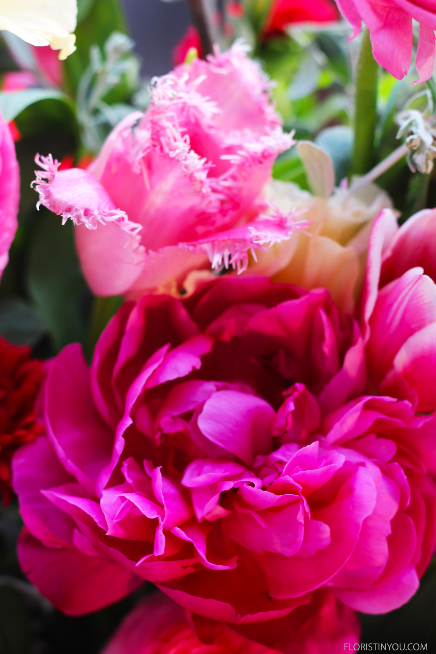 And fringed edged pink Parrot tulips. Adieu!