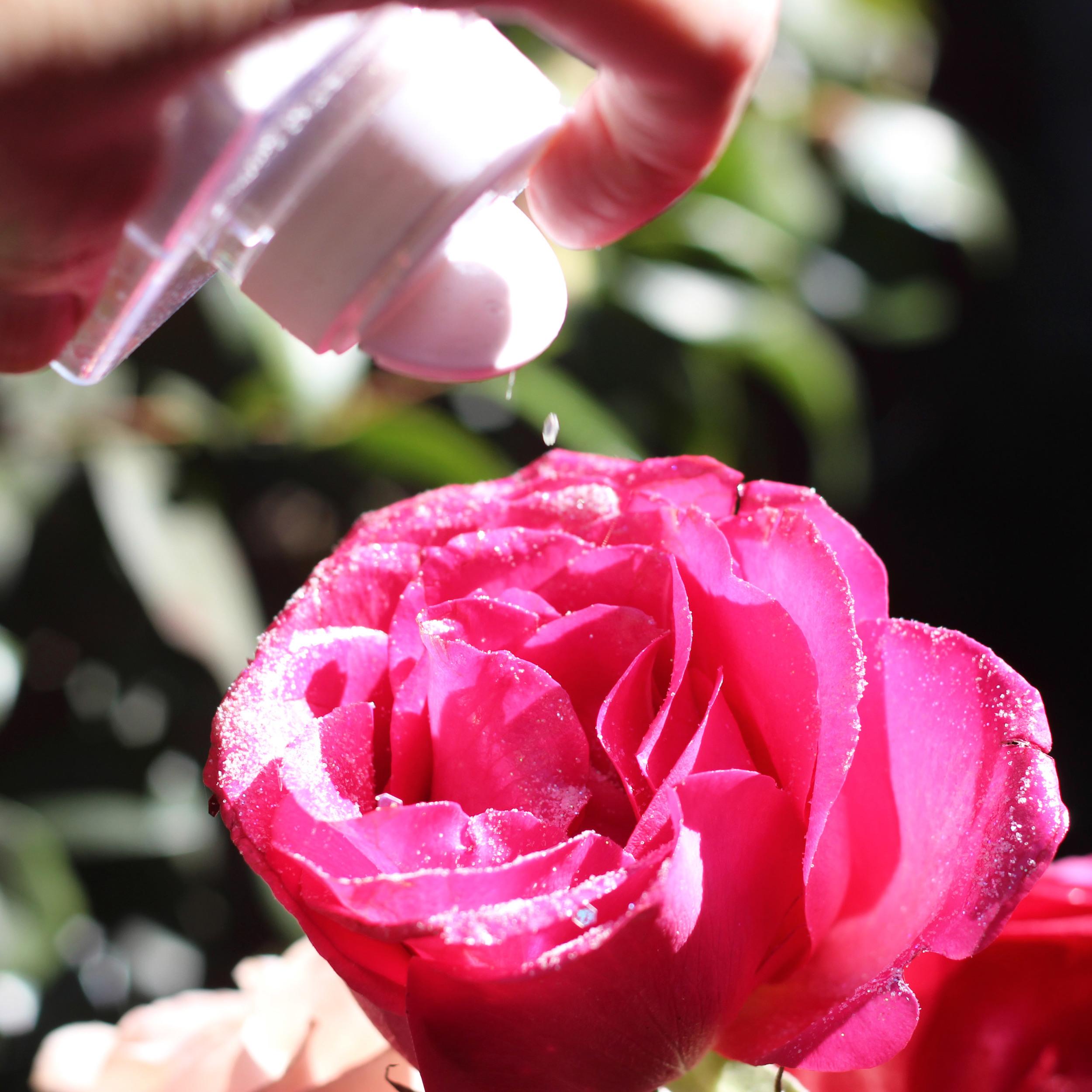 Sprinkle jumbo glitter on edges. Put glitter on half fuchsia roses.