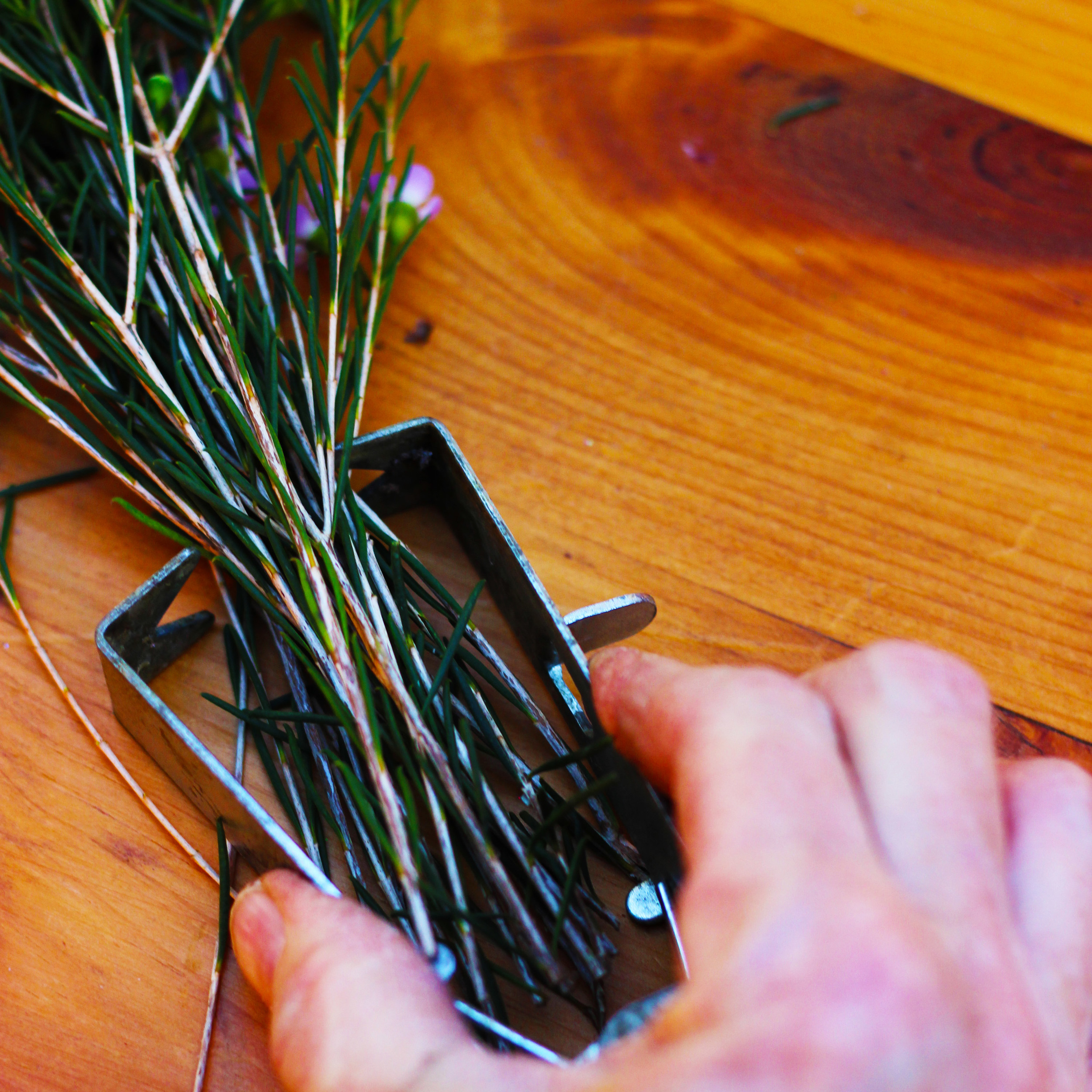 Use a stripper to take small leaves off bottom of Wax Flower stems.