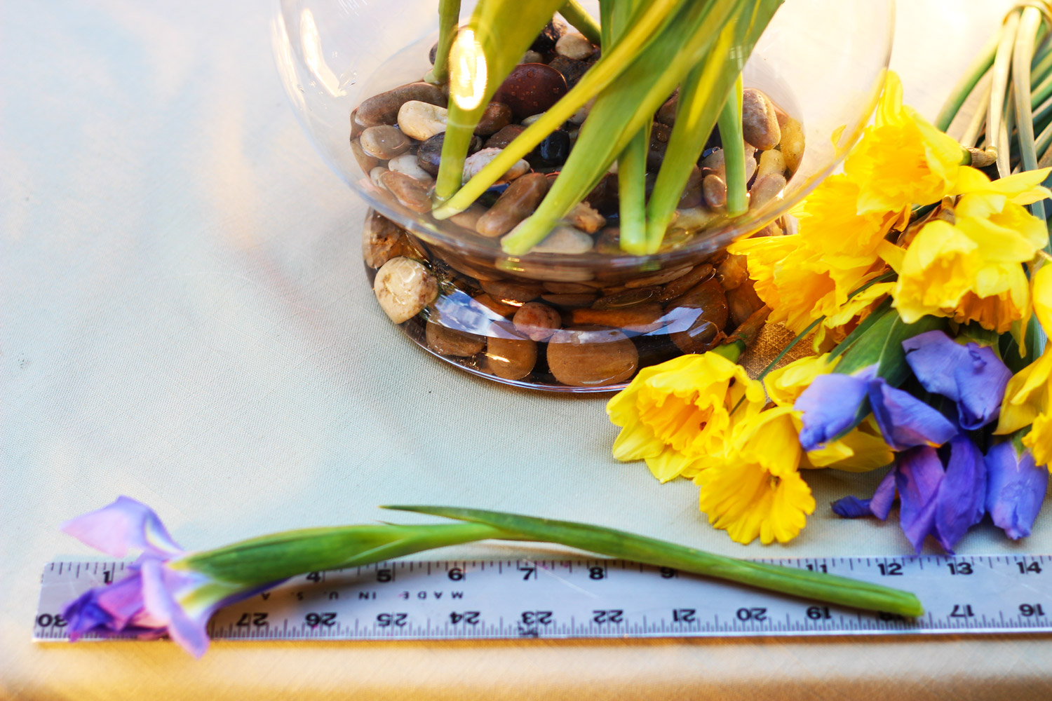 """Position each tulip stem at a diagonal to the right. Cut iris stems at 12"""""""