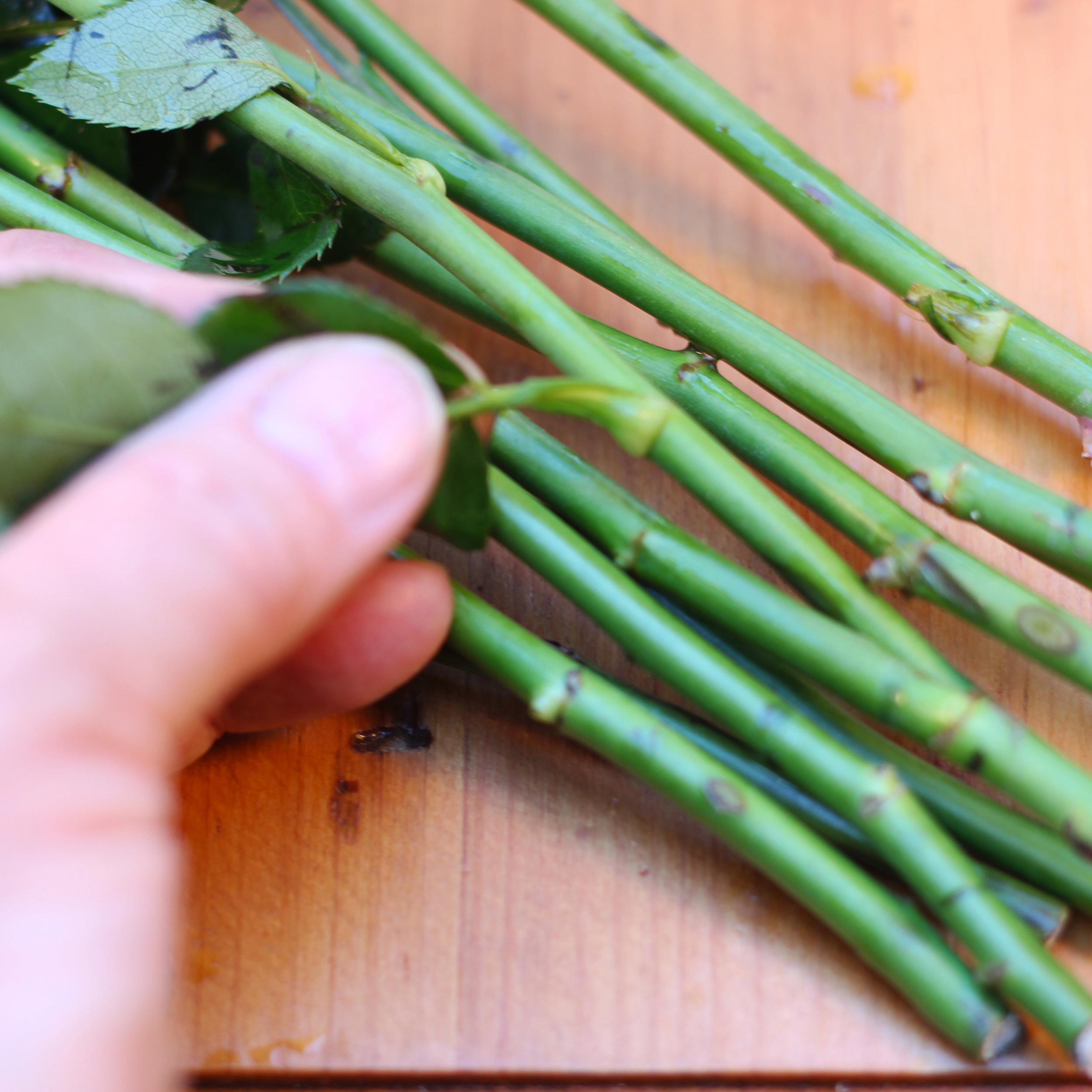 Break off any thorns on rose stems with your thumb. Remove leaves below water line.