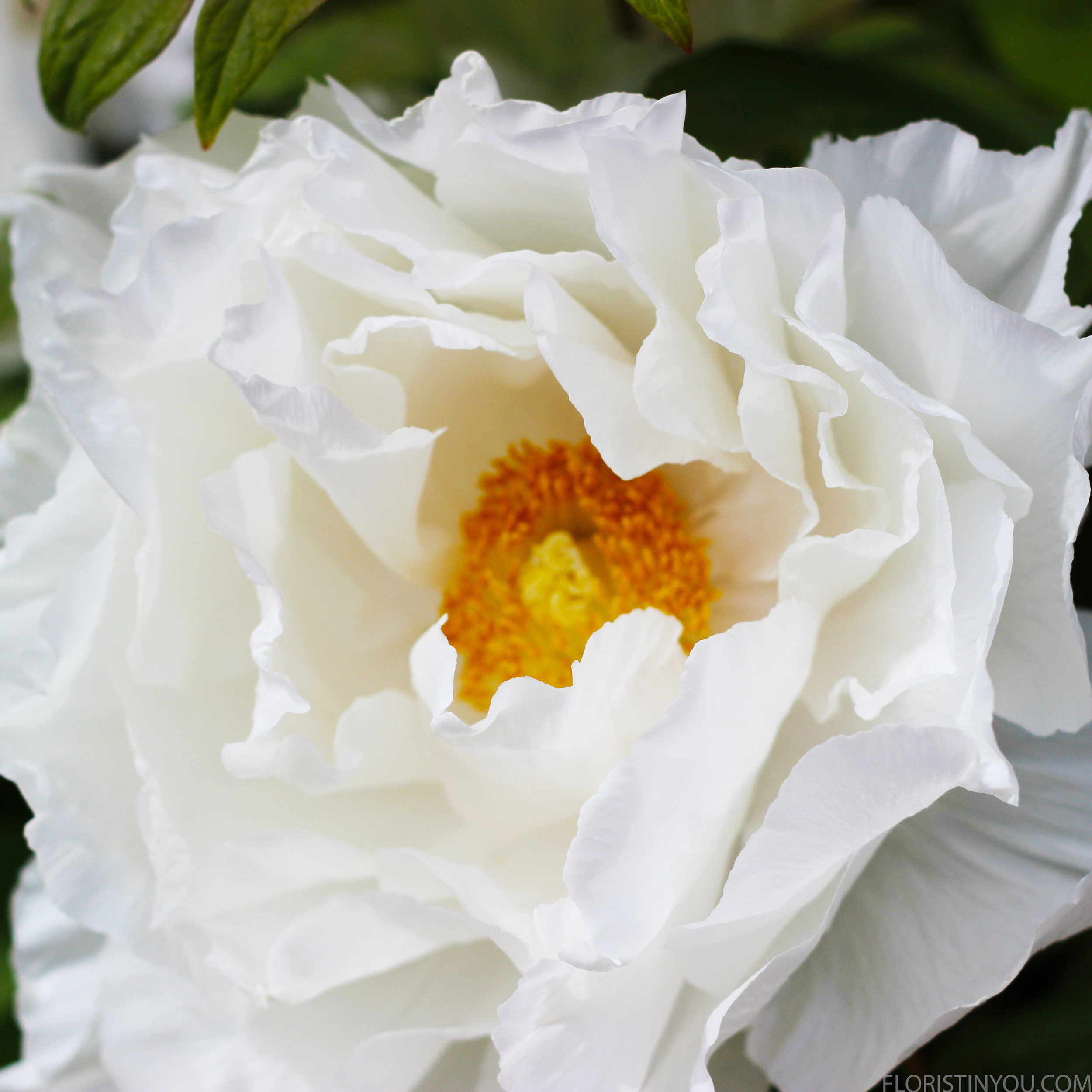 We inquired within. We were told they are called tree peonies.