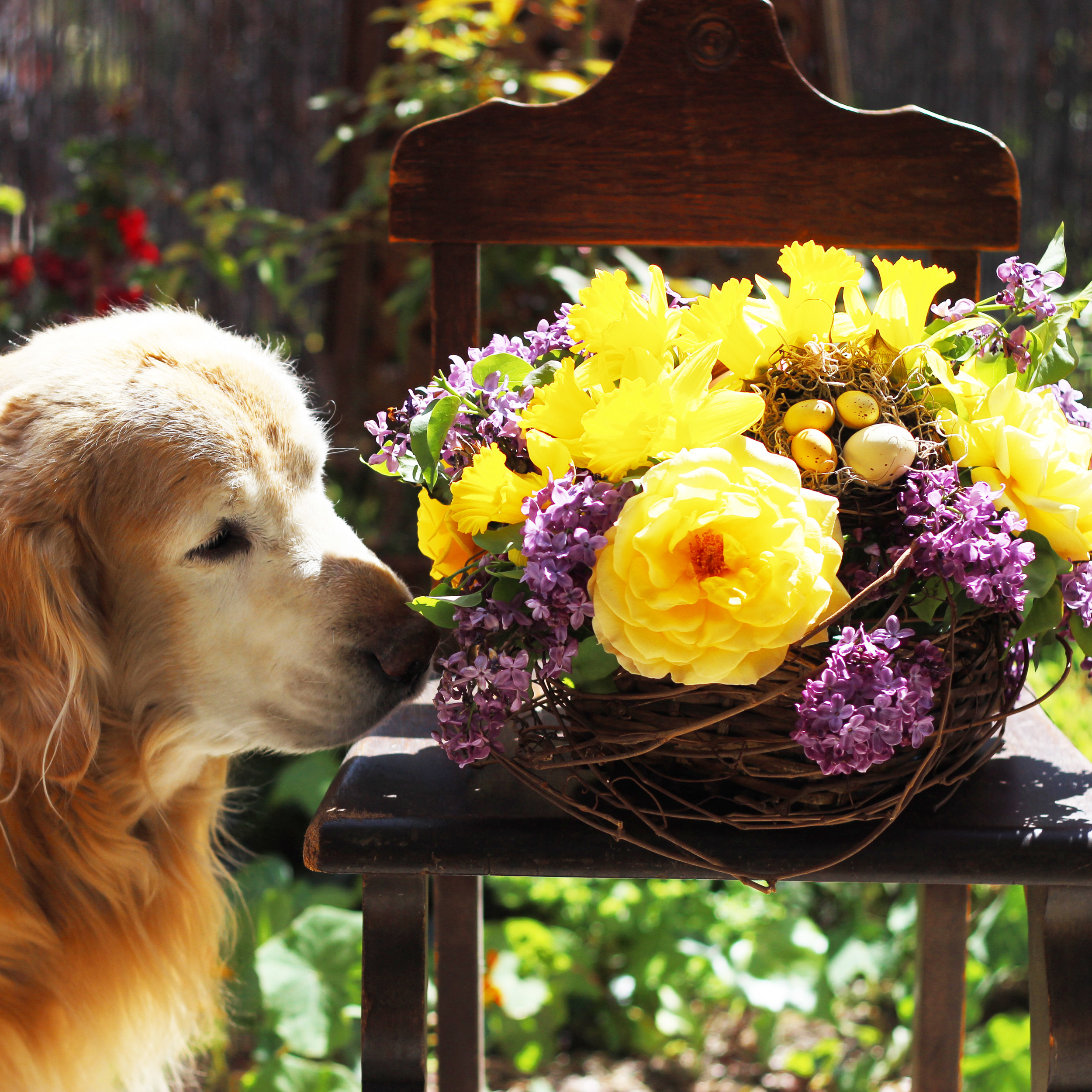 """Buddy says, """"Oui oui, these smell sweet to me!"""""""