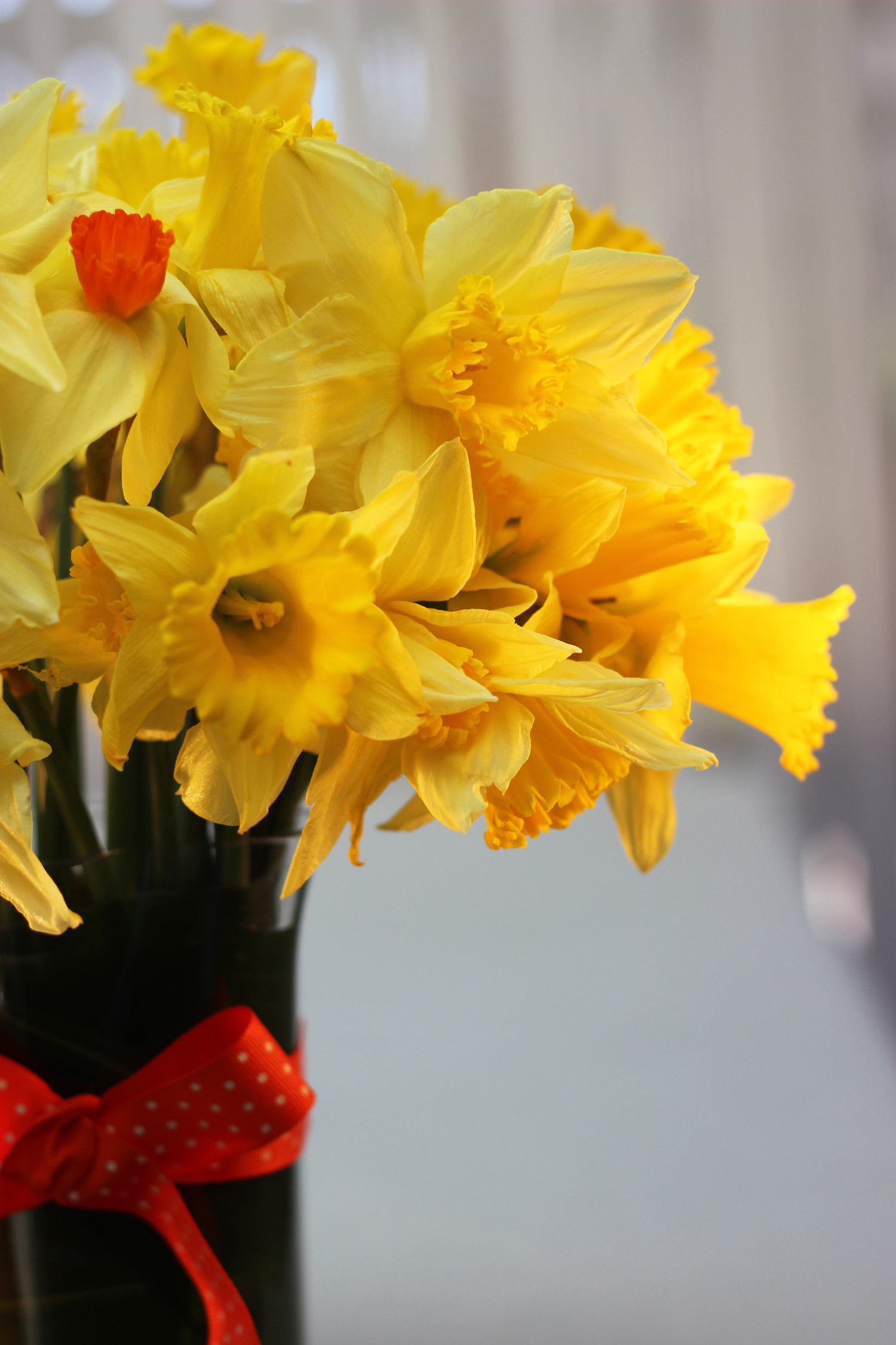 The ribbon echoes the color of the one orange centered daffodil.