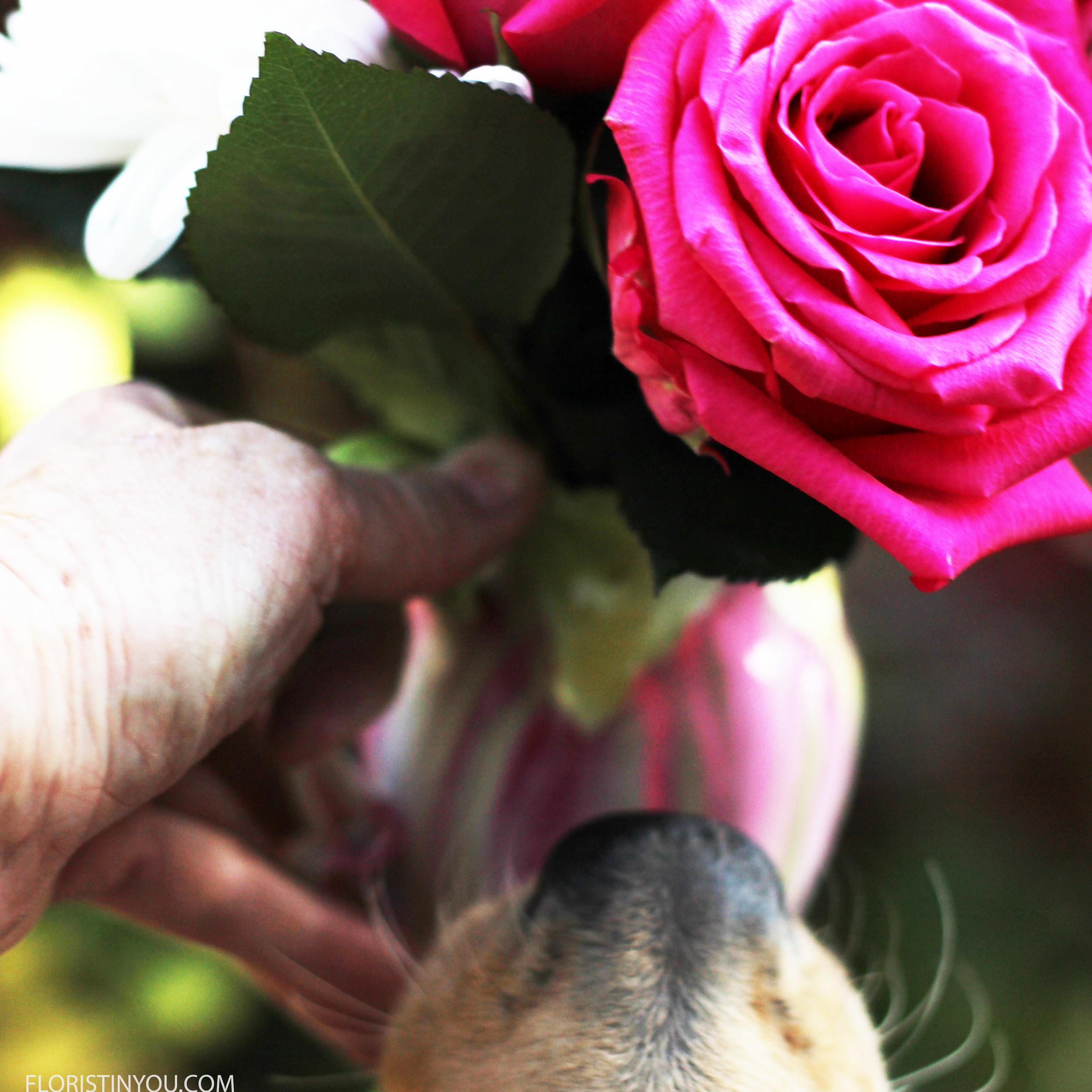 Oh no! She jumped up and bit the rose! You were supposed to smell it not bite it! Silly dog.
