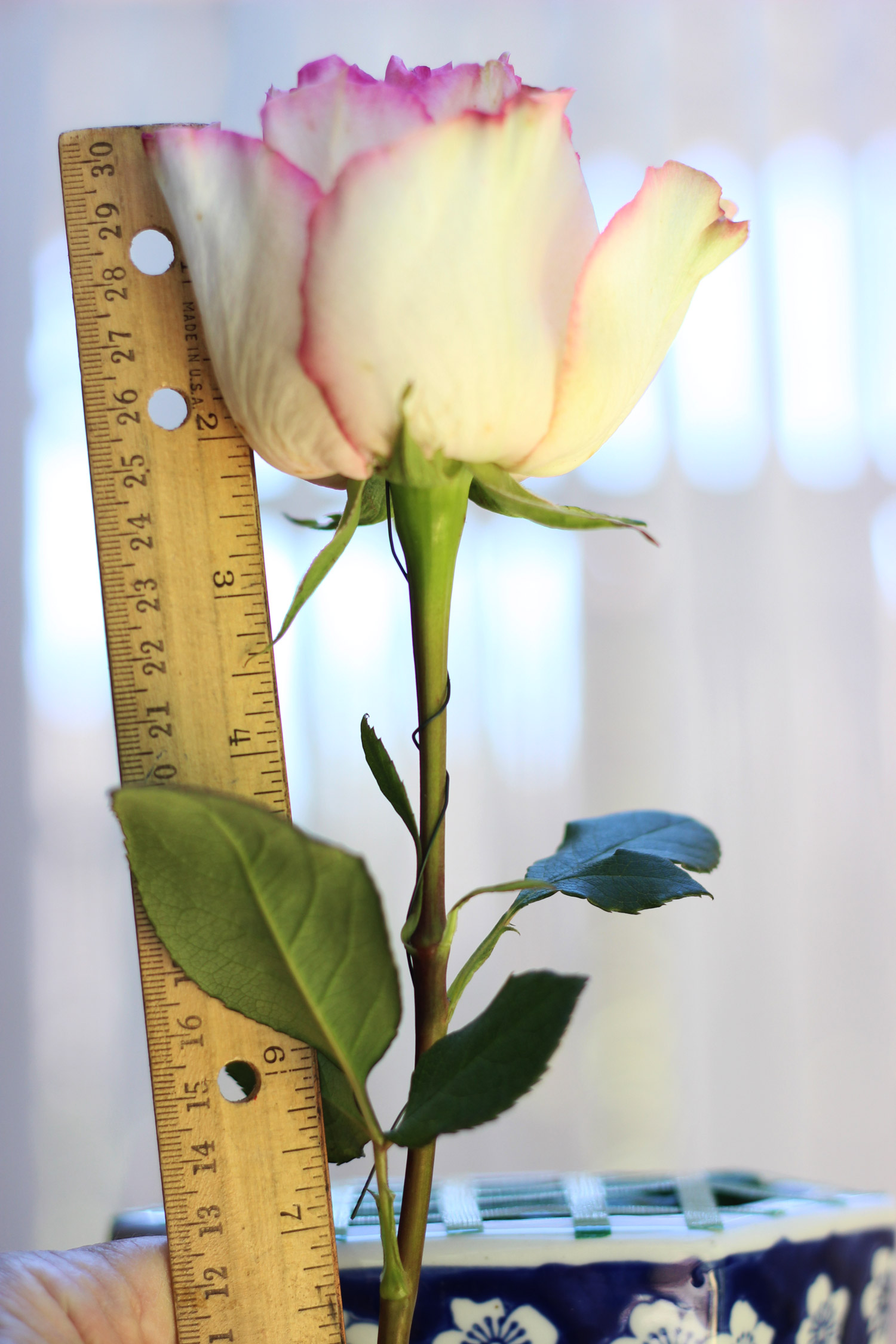 Wire roses. Hold rose up to determine height of middle rose (12 inches).
