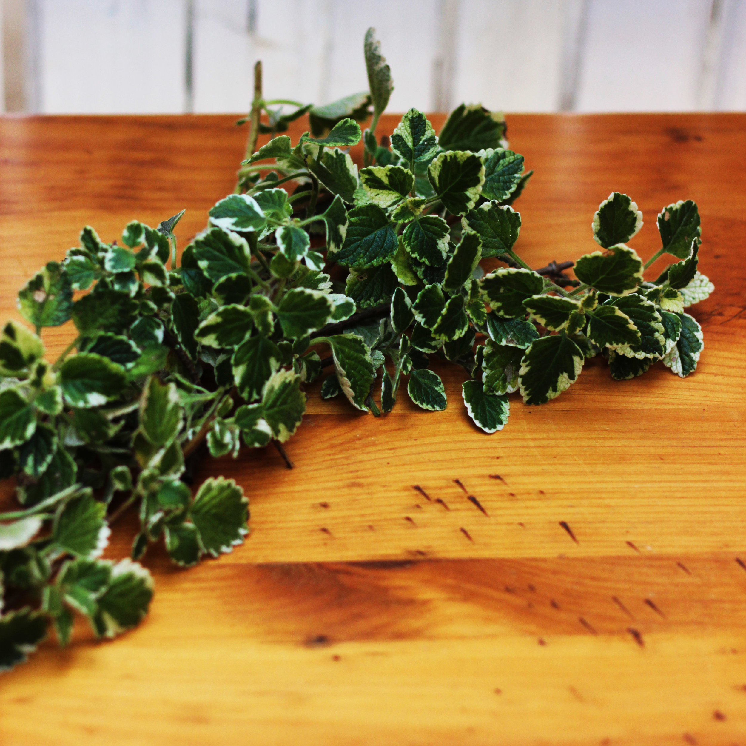 Add Swedish Ivy 8 - 12 inches long to fill in.