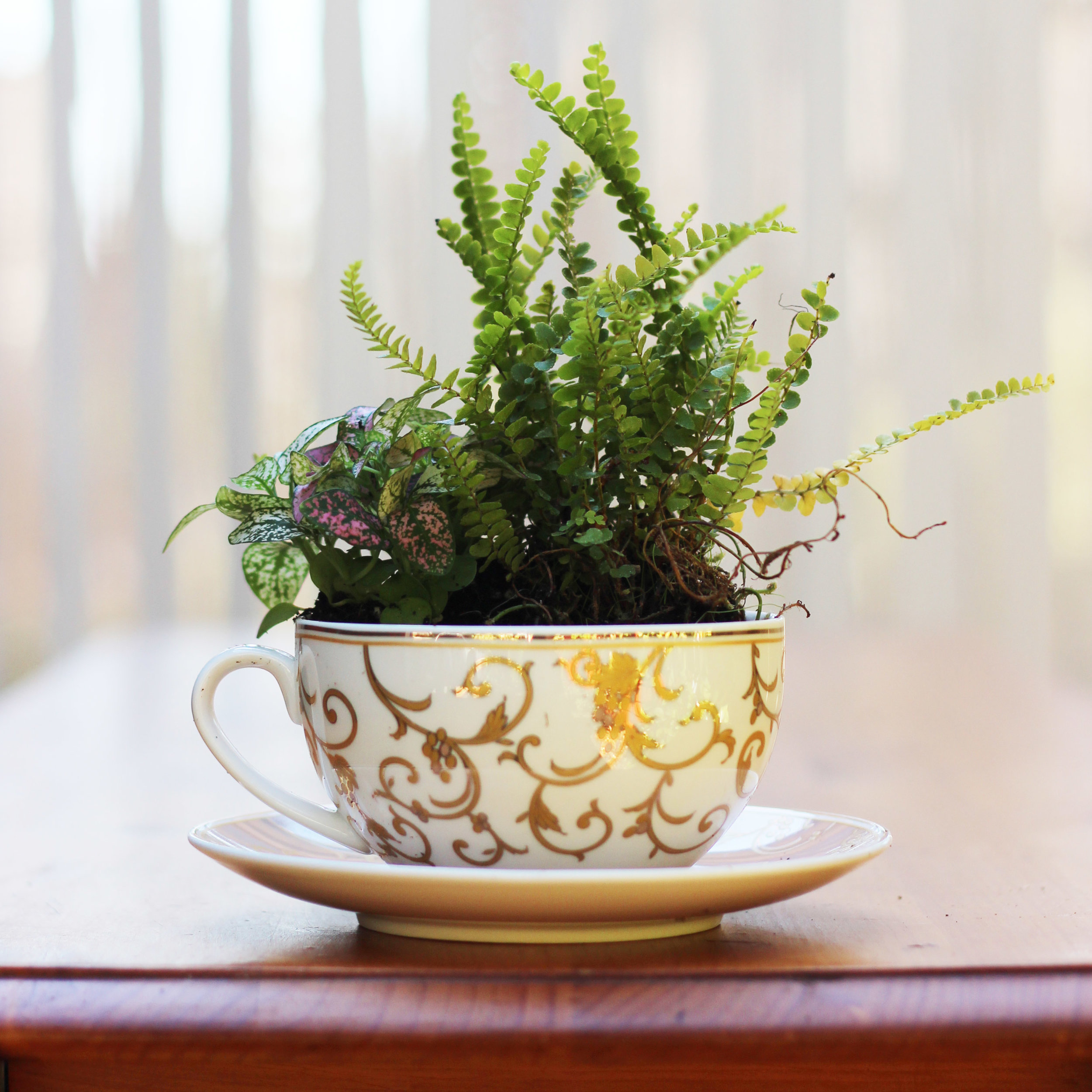 Plant Polka Dot Plant in back left of the cup.
