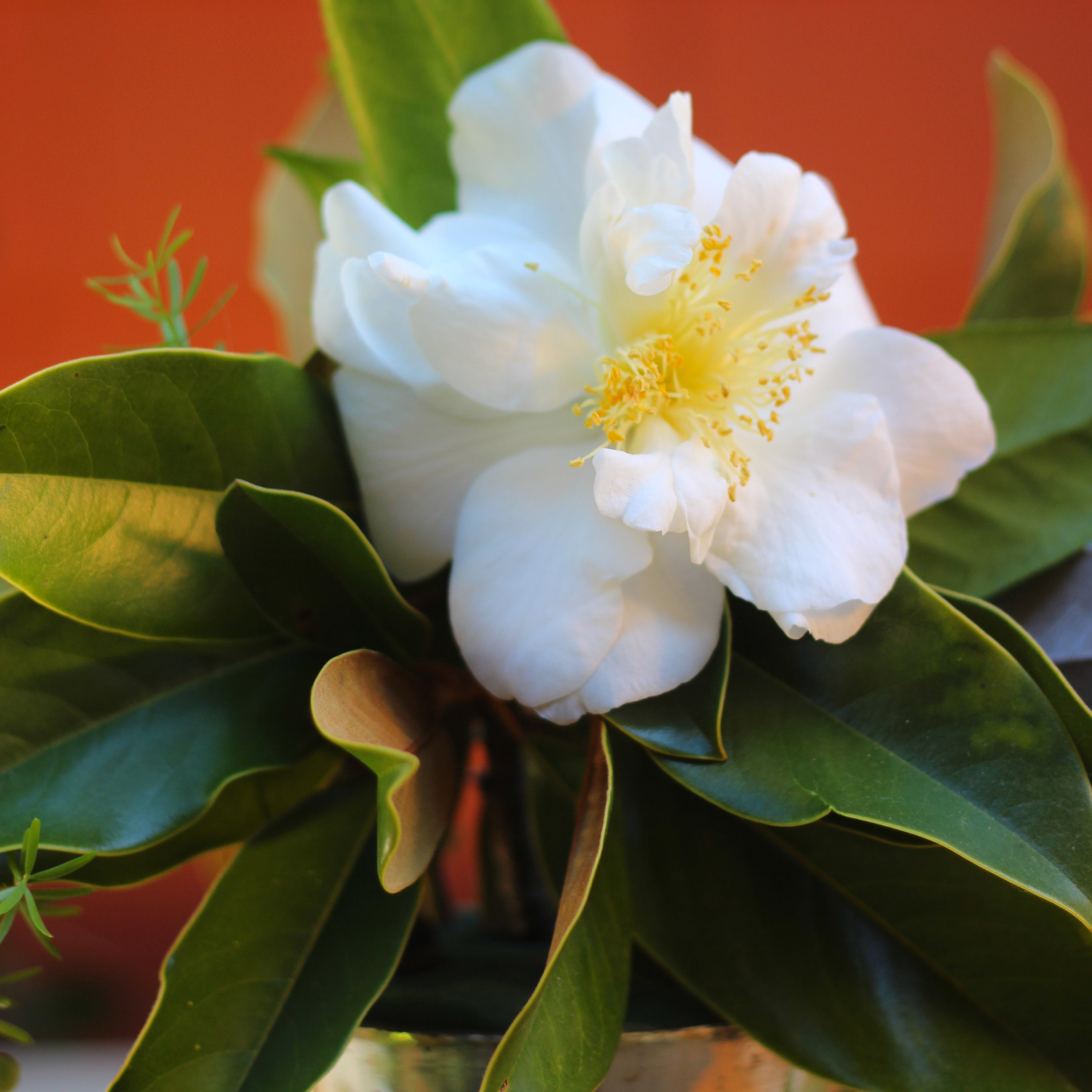 Place a large camellia front and center.