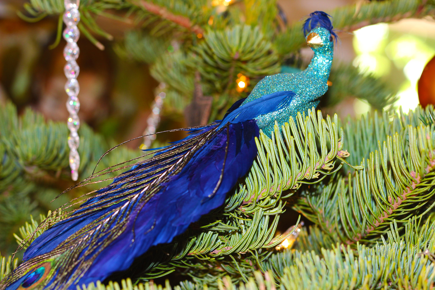 Find a roost for your peacock.
