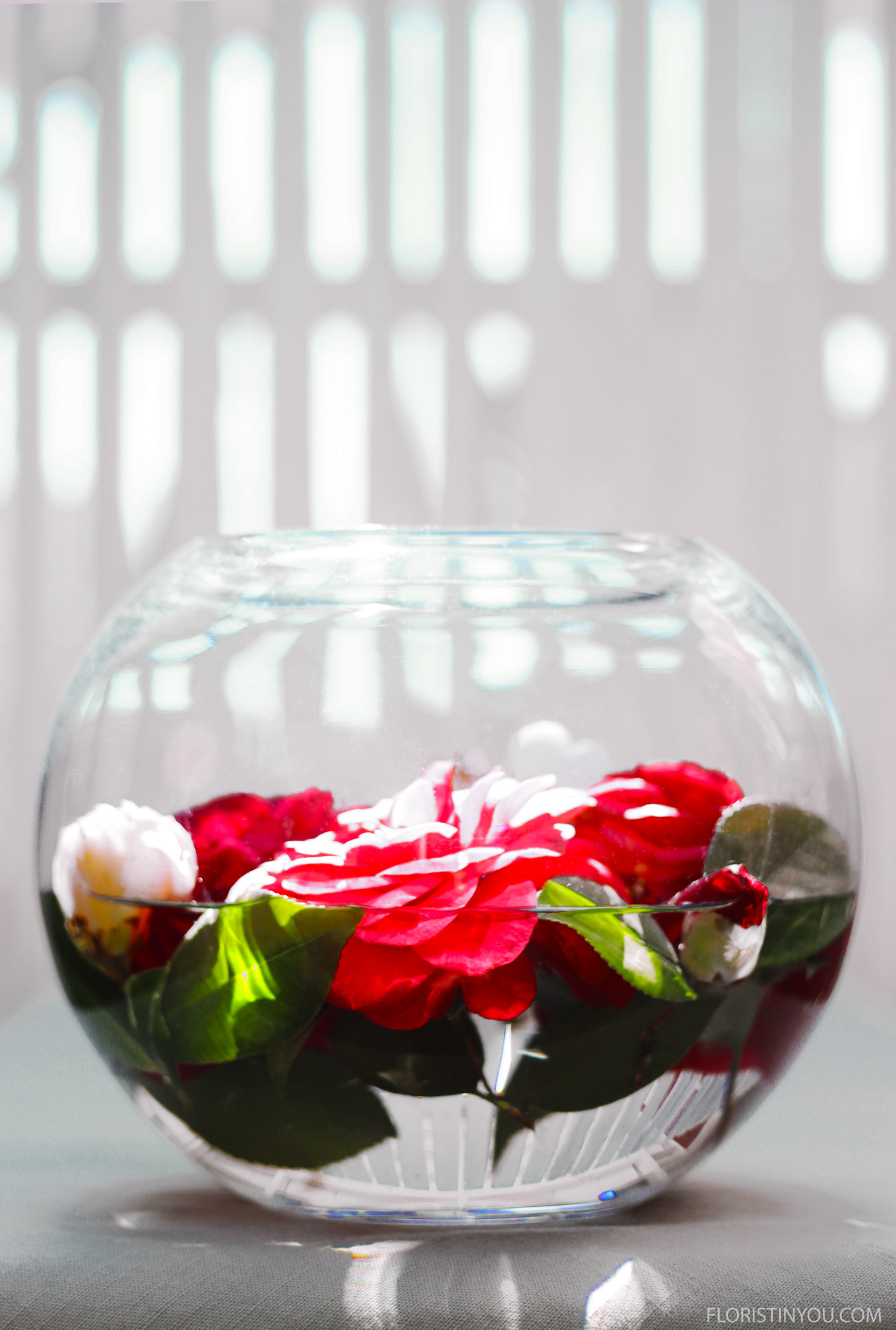 Floating Camellias