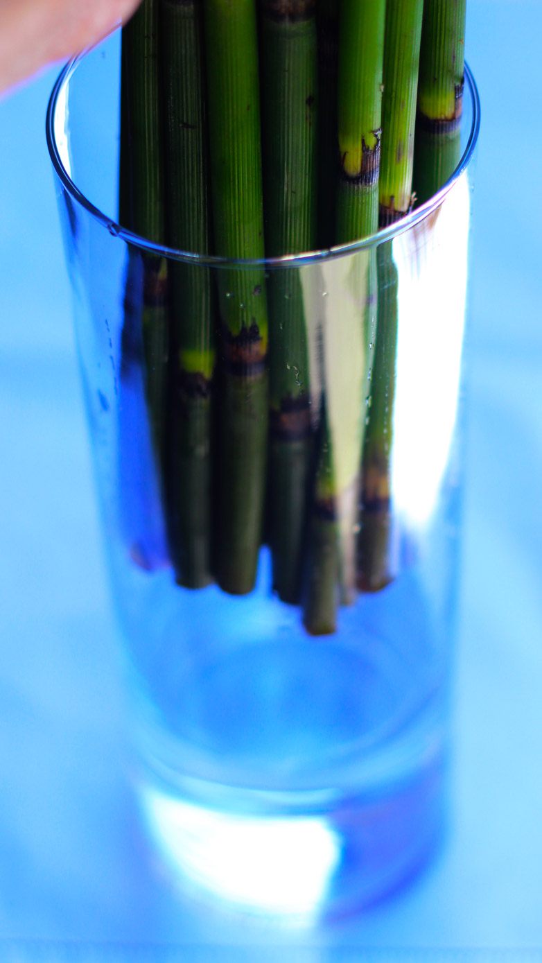 Cut ends of Horsetail and put into narrow vase.
