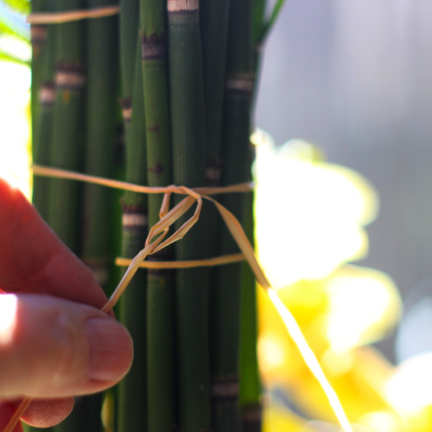 Tie one thin piece of raffia around all 3 buncles with a double knot. Trim short, then cut rubber bands off.