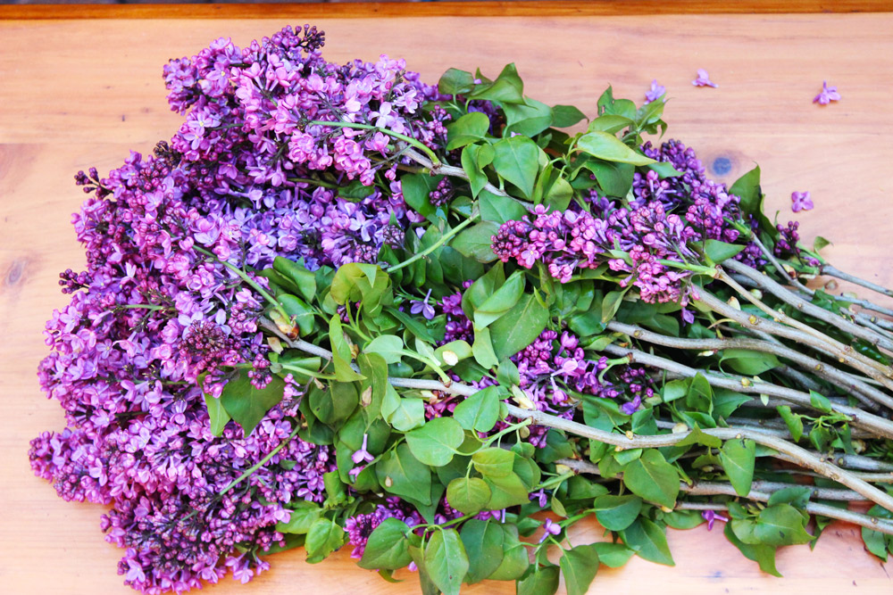 As soon as you bring your lilacs home, cut 16 stalks to 17 inches and 4 stalks to 11 inches.