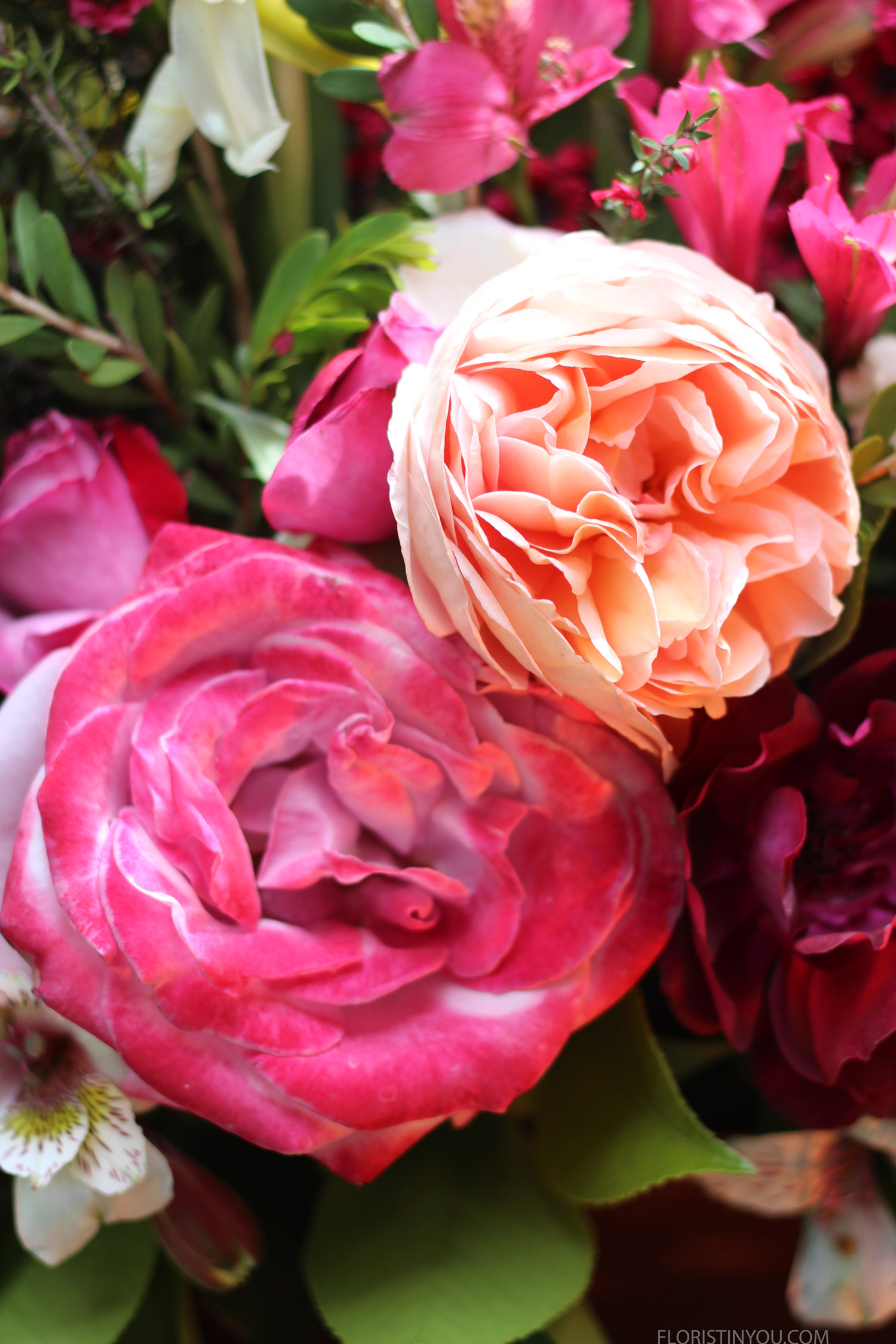 Wow these garden roses are show stoppers.