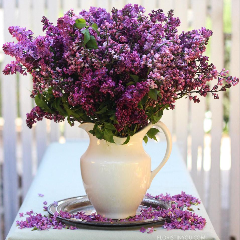 Lovely Lilacs