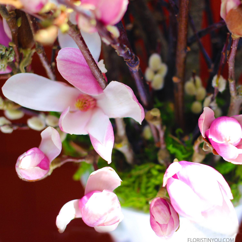 These are the Purple Magnolia blossoms.