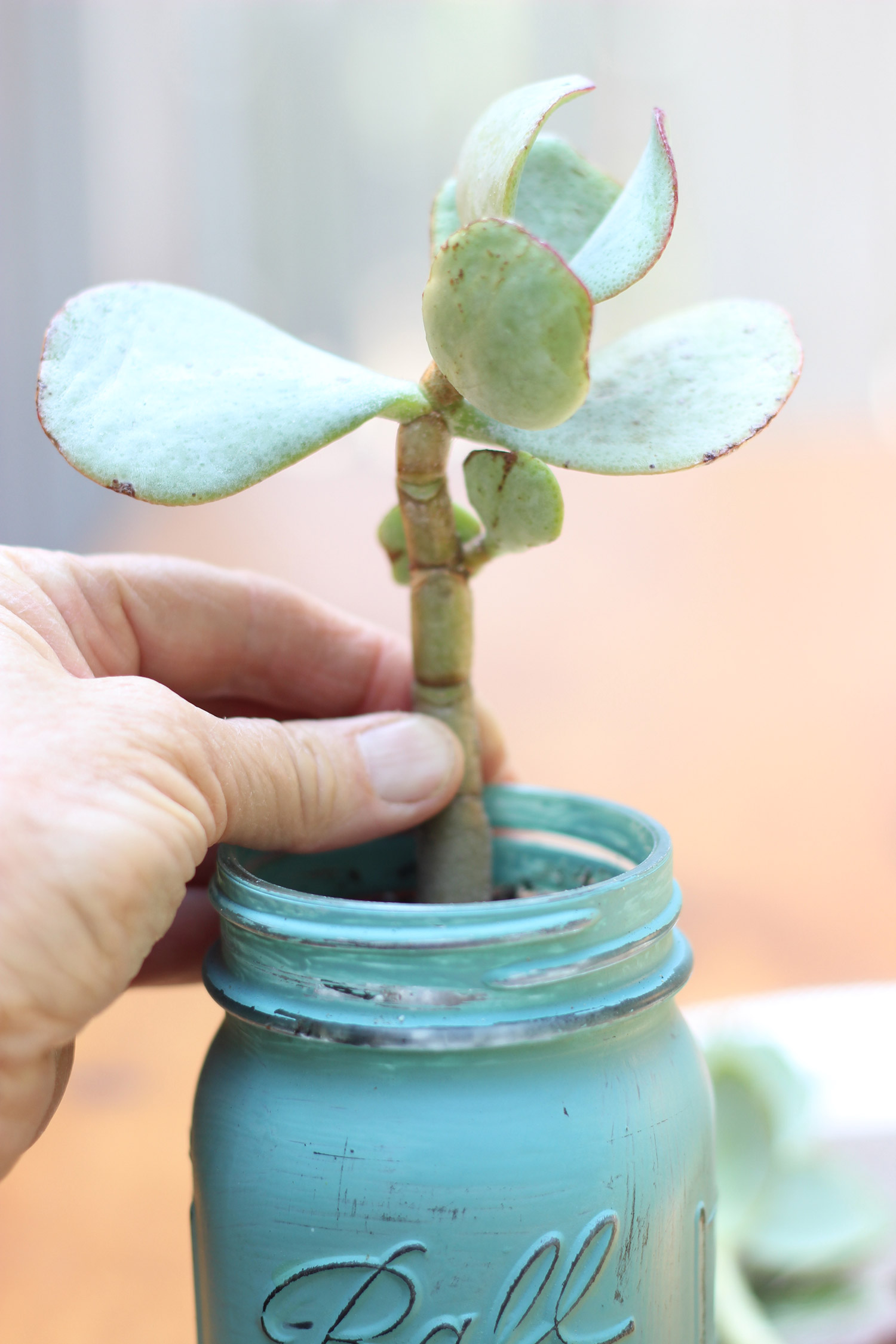 Push your first succulent in right back.