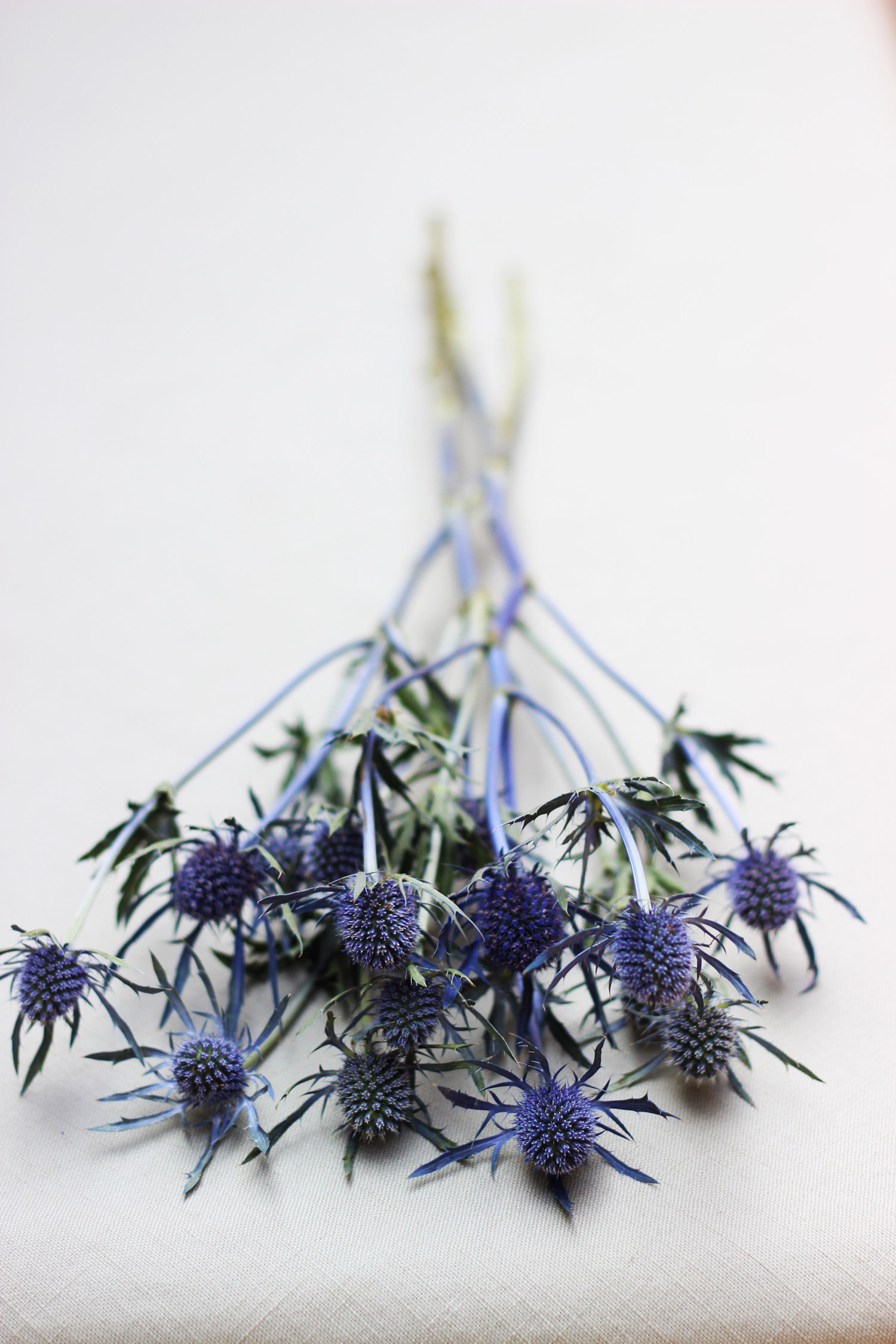 And Amethyst Sea Holly.  Love that purple blue color.
