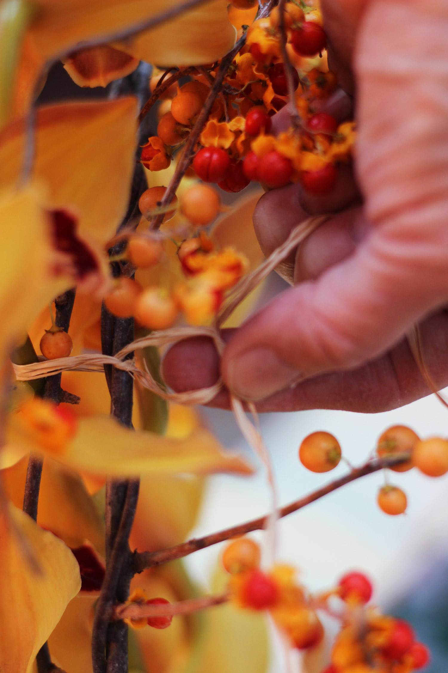 Tie orchid to vine with raffia. Make 2 knots. Trim.