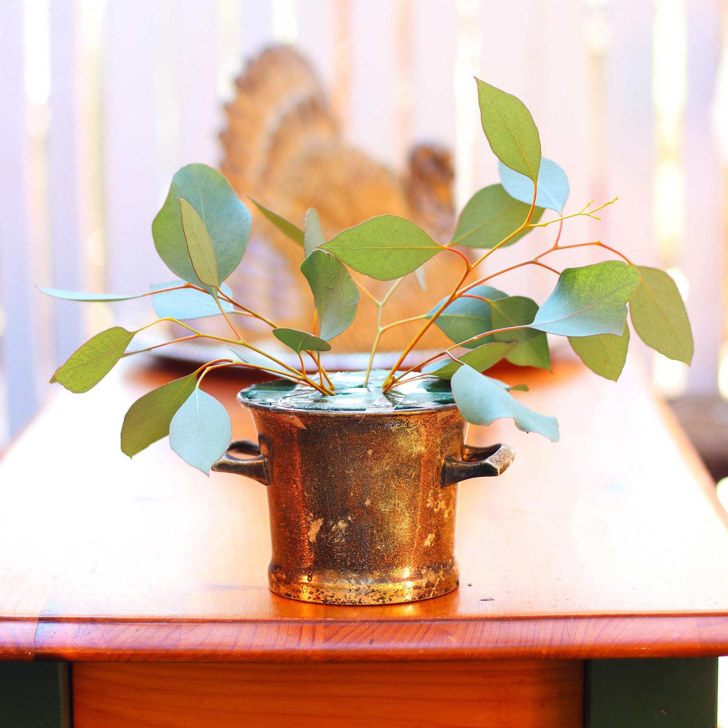 Insert half a dozen Eucalyptus leaves.