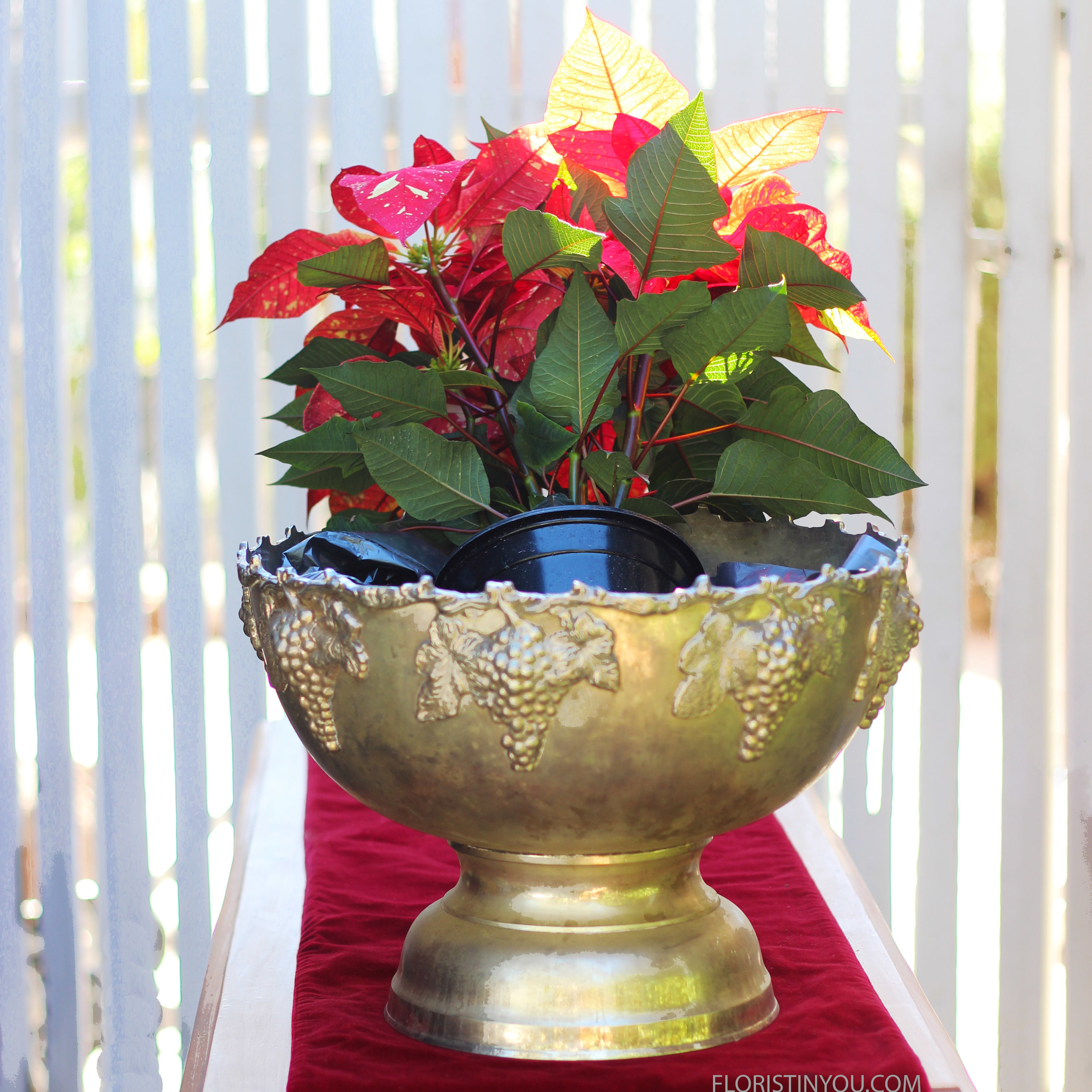 Lay spotted poinsettia in. Splay it outward.