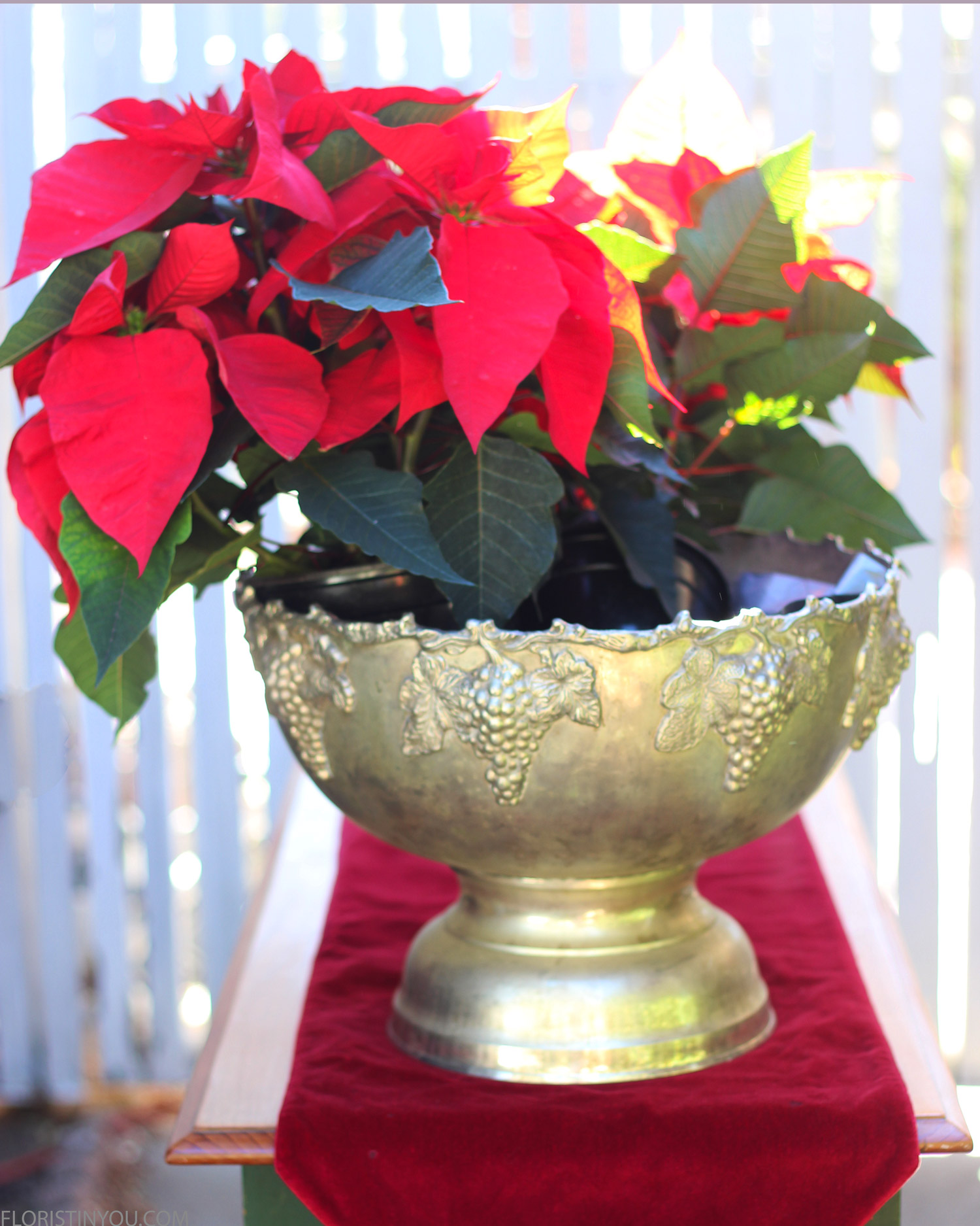 Lay poinsettia on left. Splay it out.