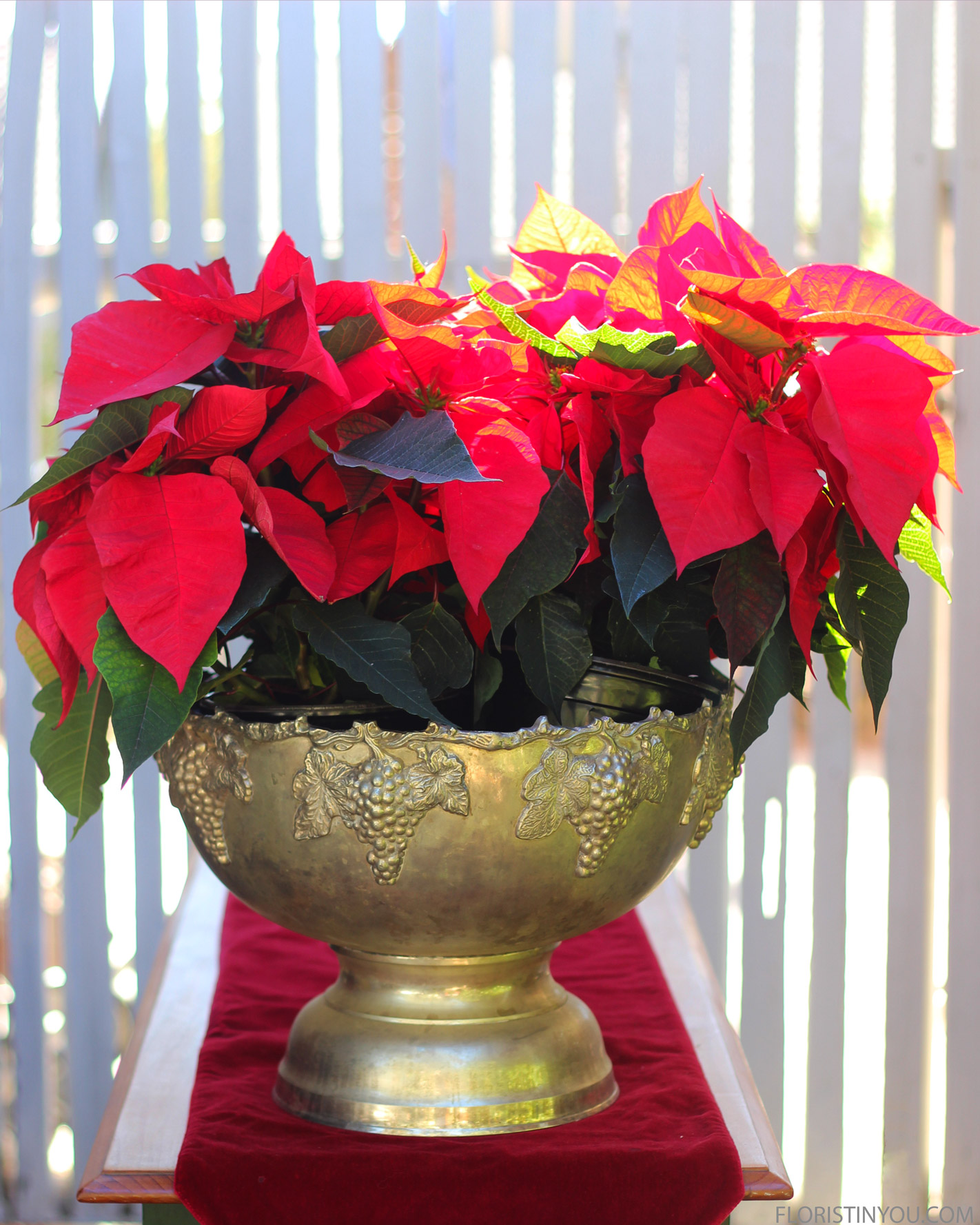 Lay poinsettia on right. Splay it out.
