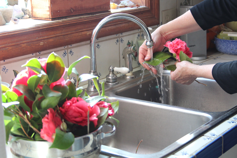 Wash camellia leaves. Don't get blooms wet.