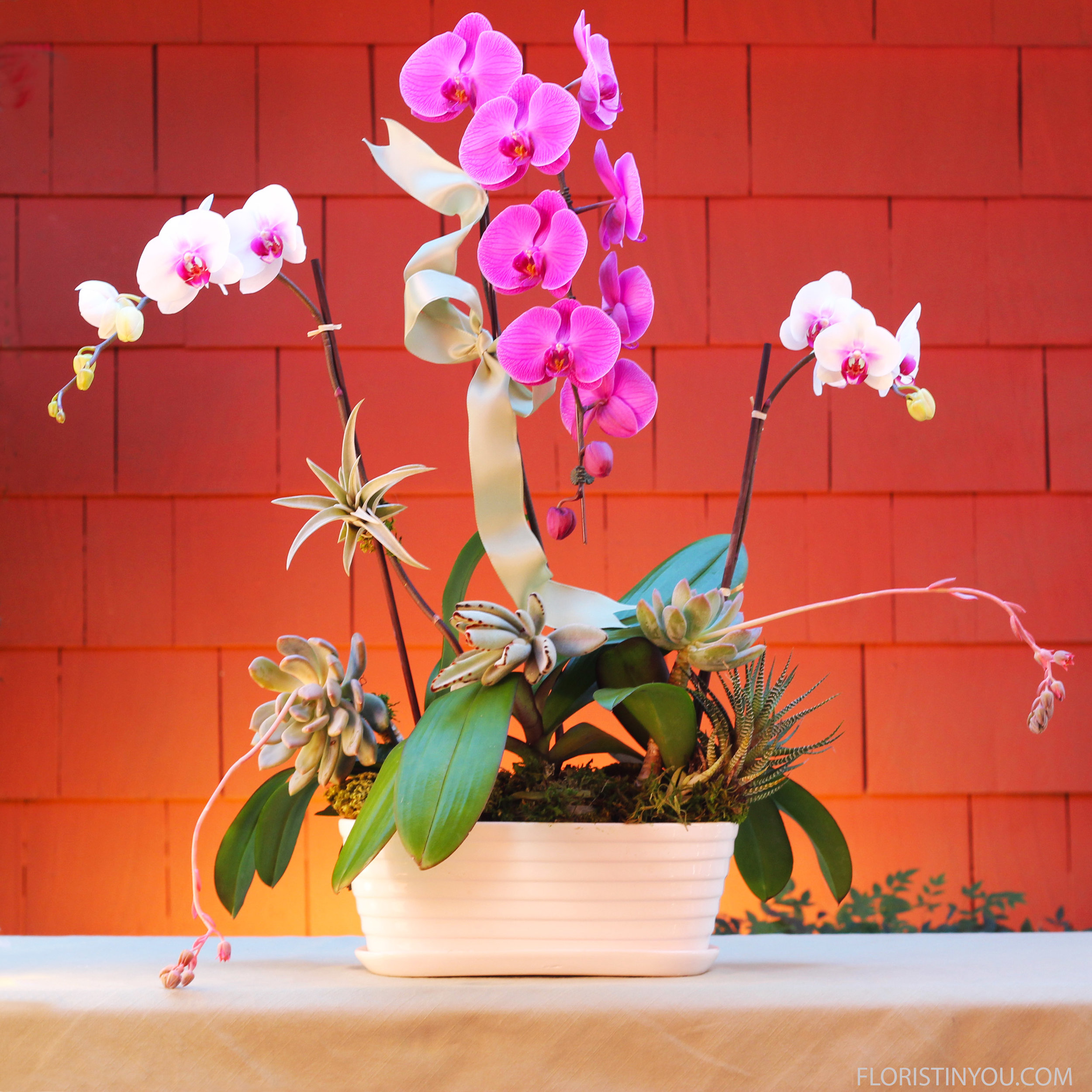 You are done with this orchid and succulent garden. Enjoy it.