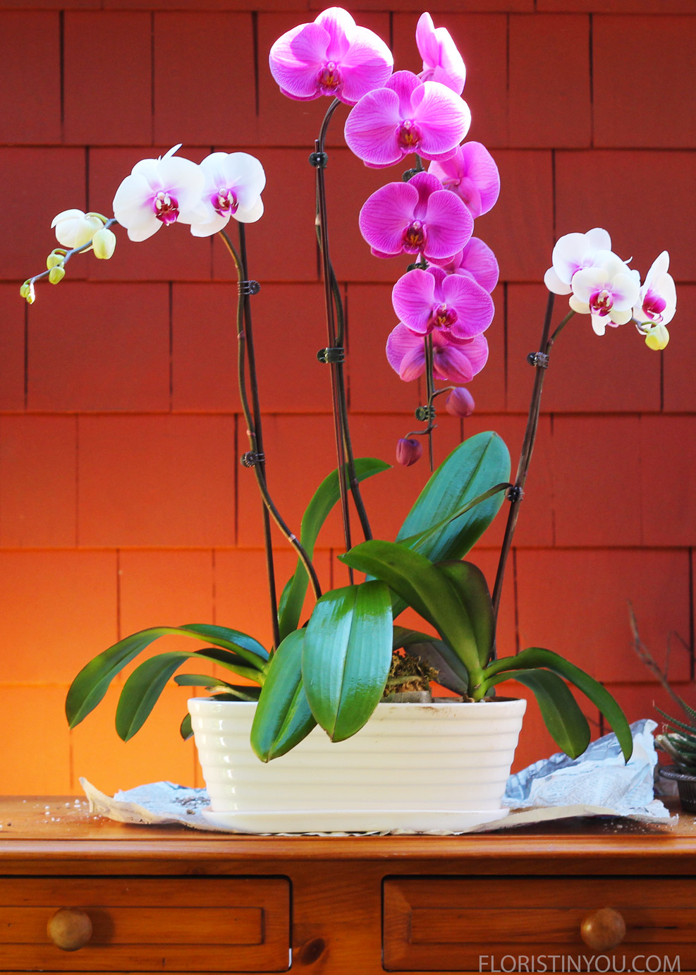 Tile end orchids out to each side a little so you have a V shape.