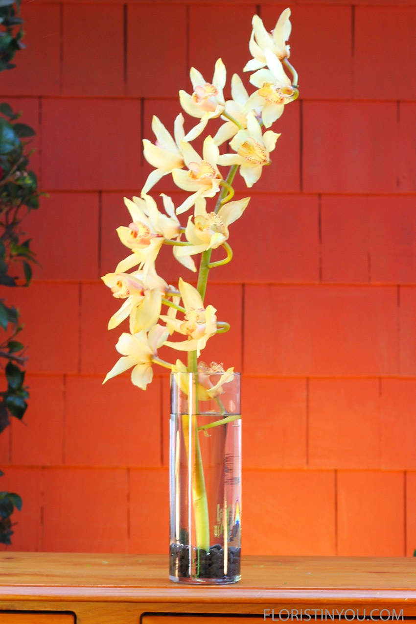 Place orchid stem in vase.