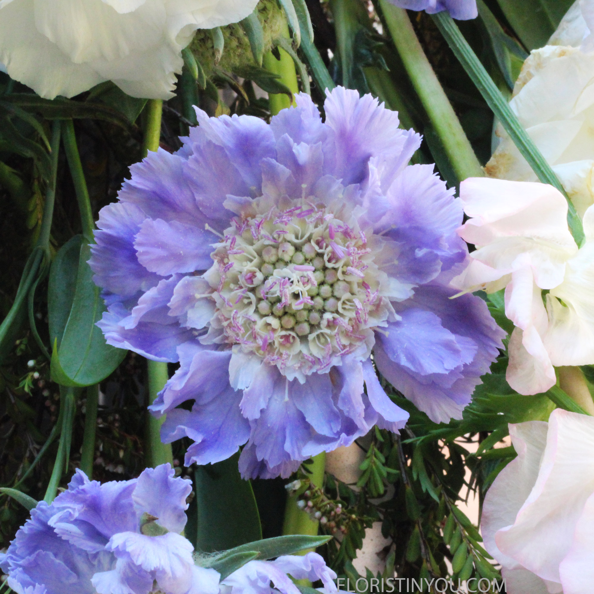 Wire so Scabiosa is facing outward.