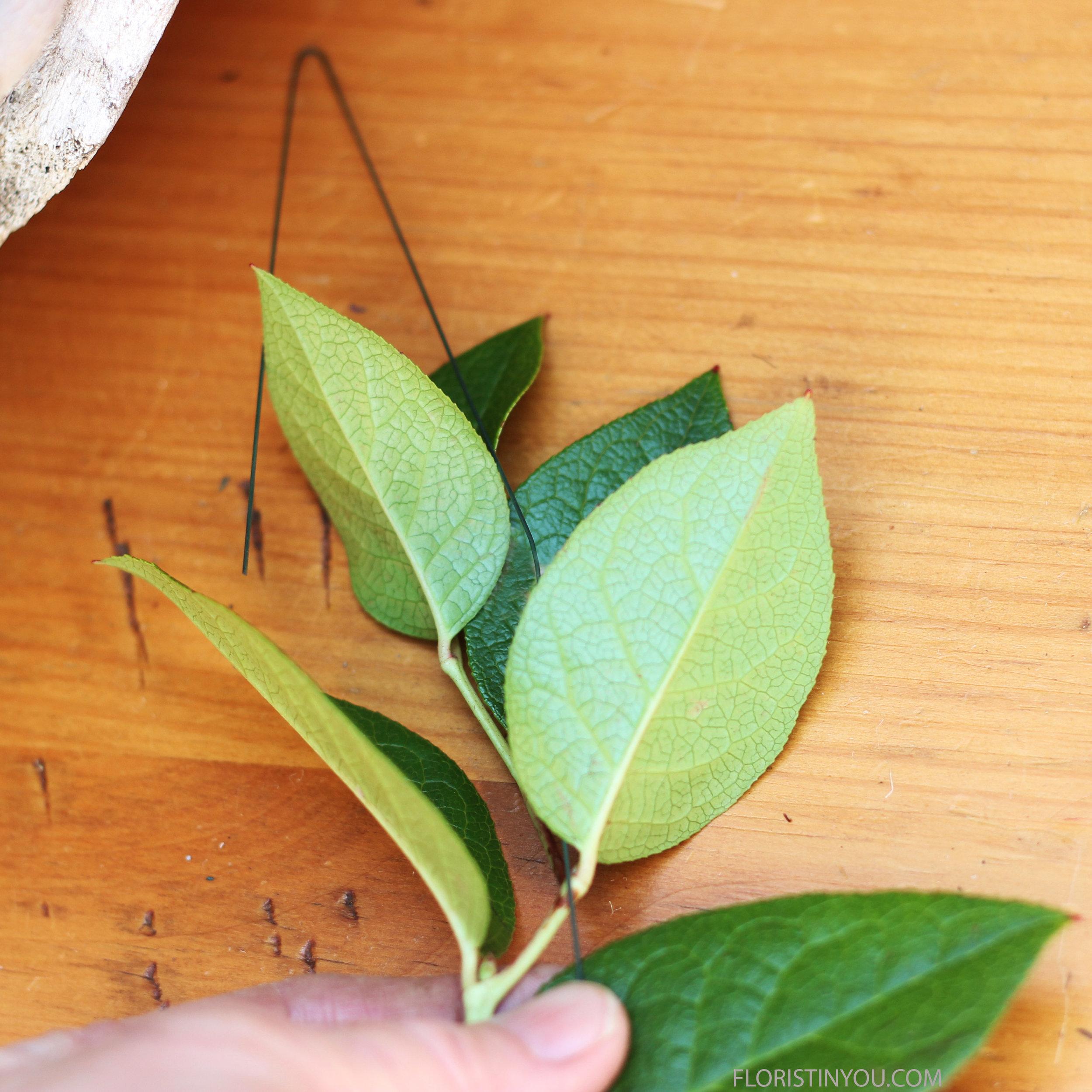 You begin the Lemon Leaf wrap the same way as the Coffee Bean Wrap.