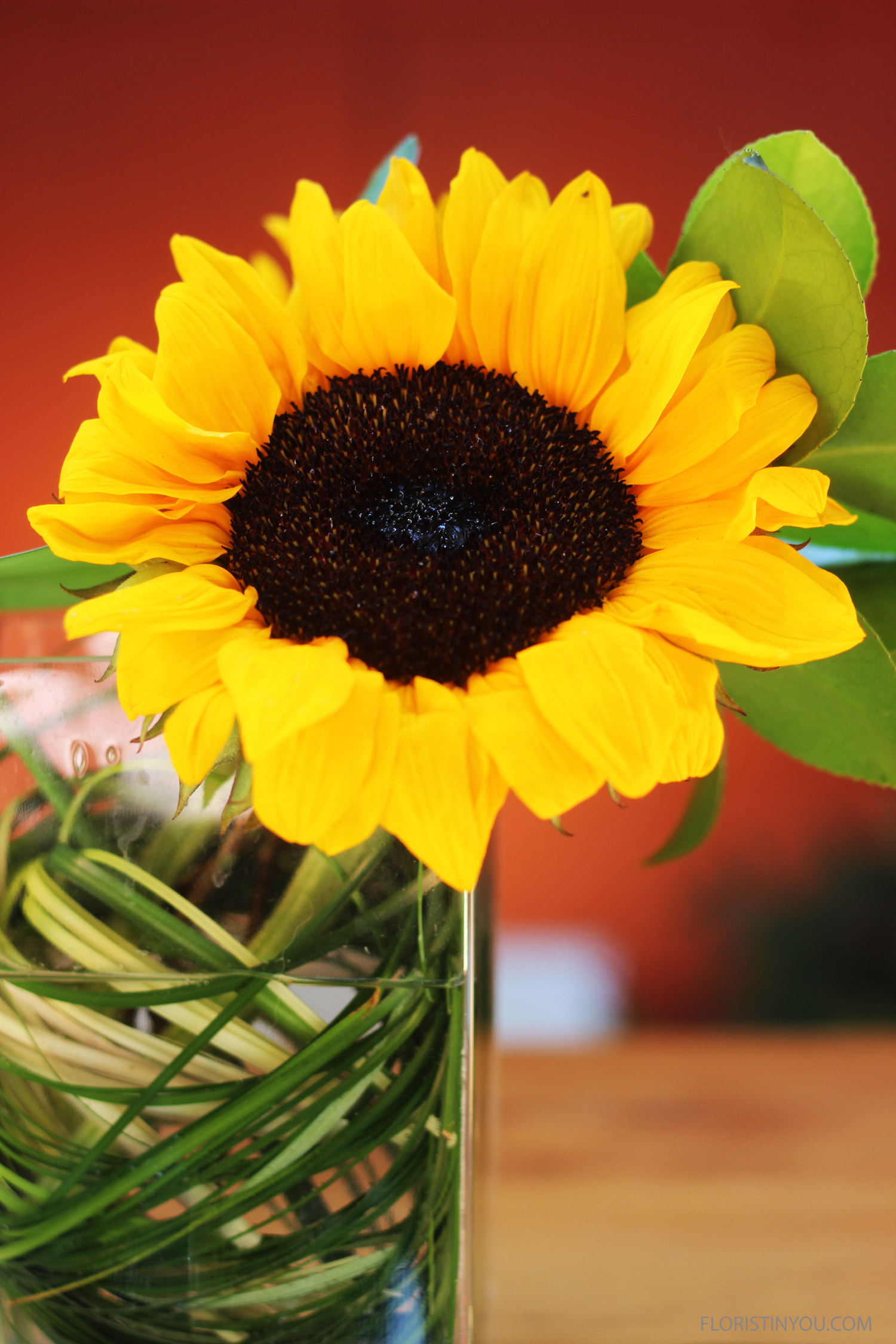 Here's a close up of the Sunflower.